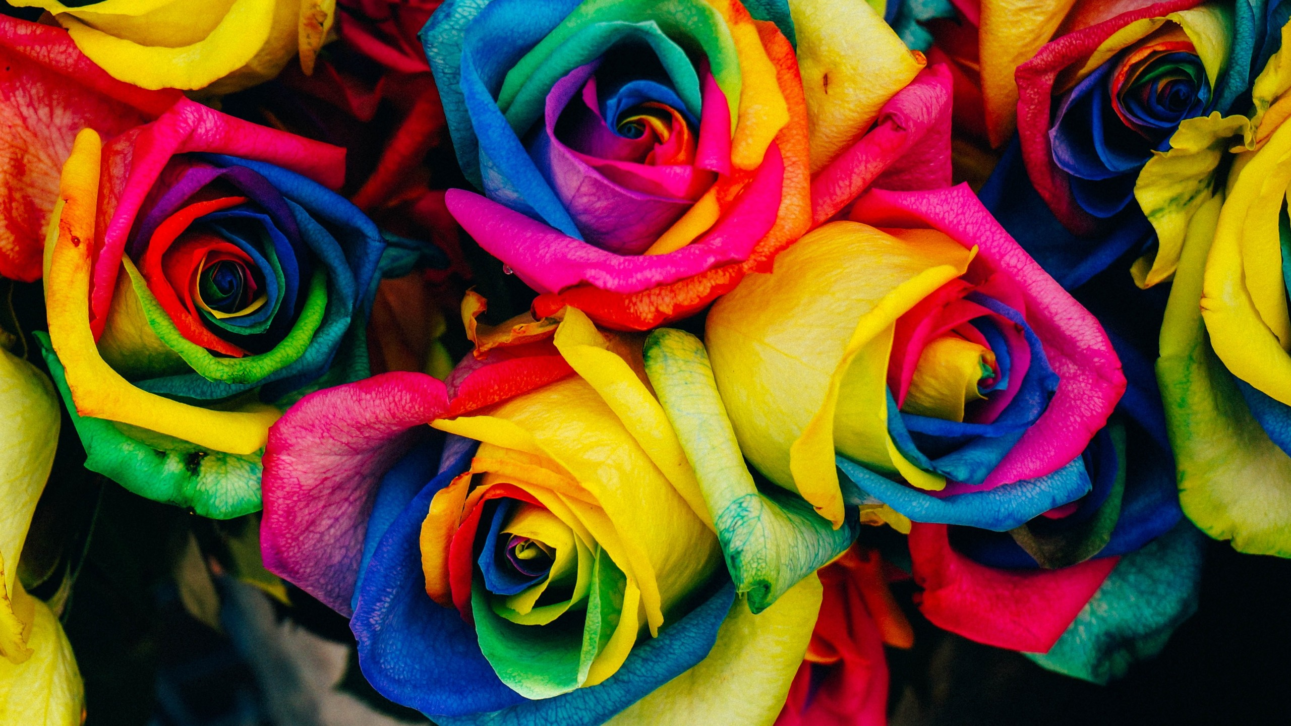 2560x1440 HD Wallpaper Roses, Multicolored, Rainbow