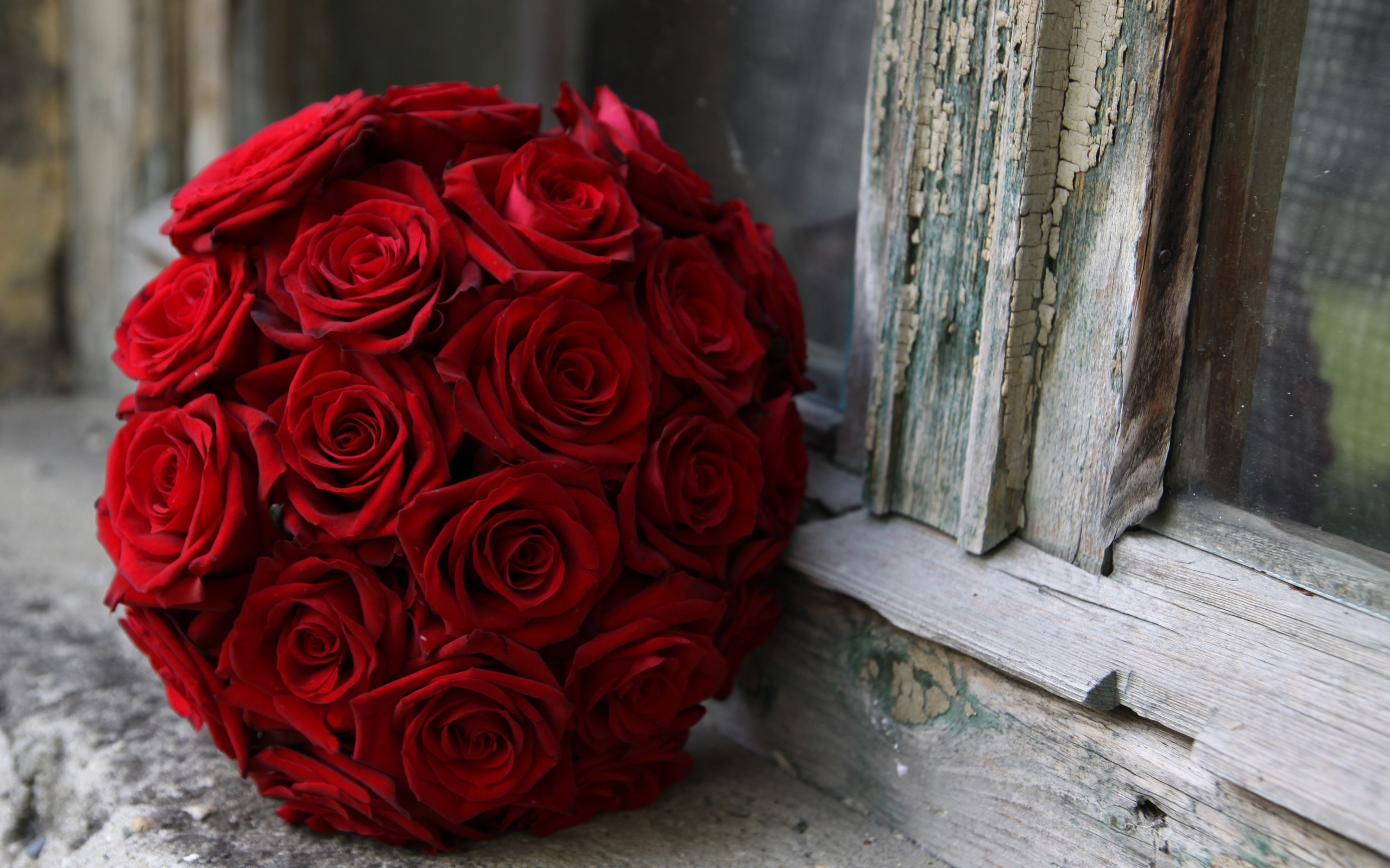 Flower wallpaper red rose 63 images 2560x1600 flowers wallpapers previous wallpaper beautiful red rose izmirmasajfo