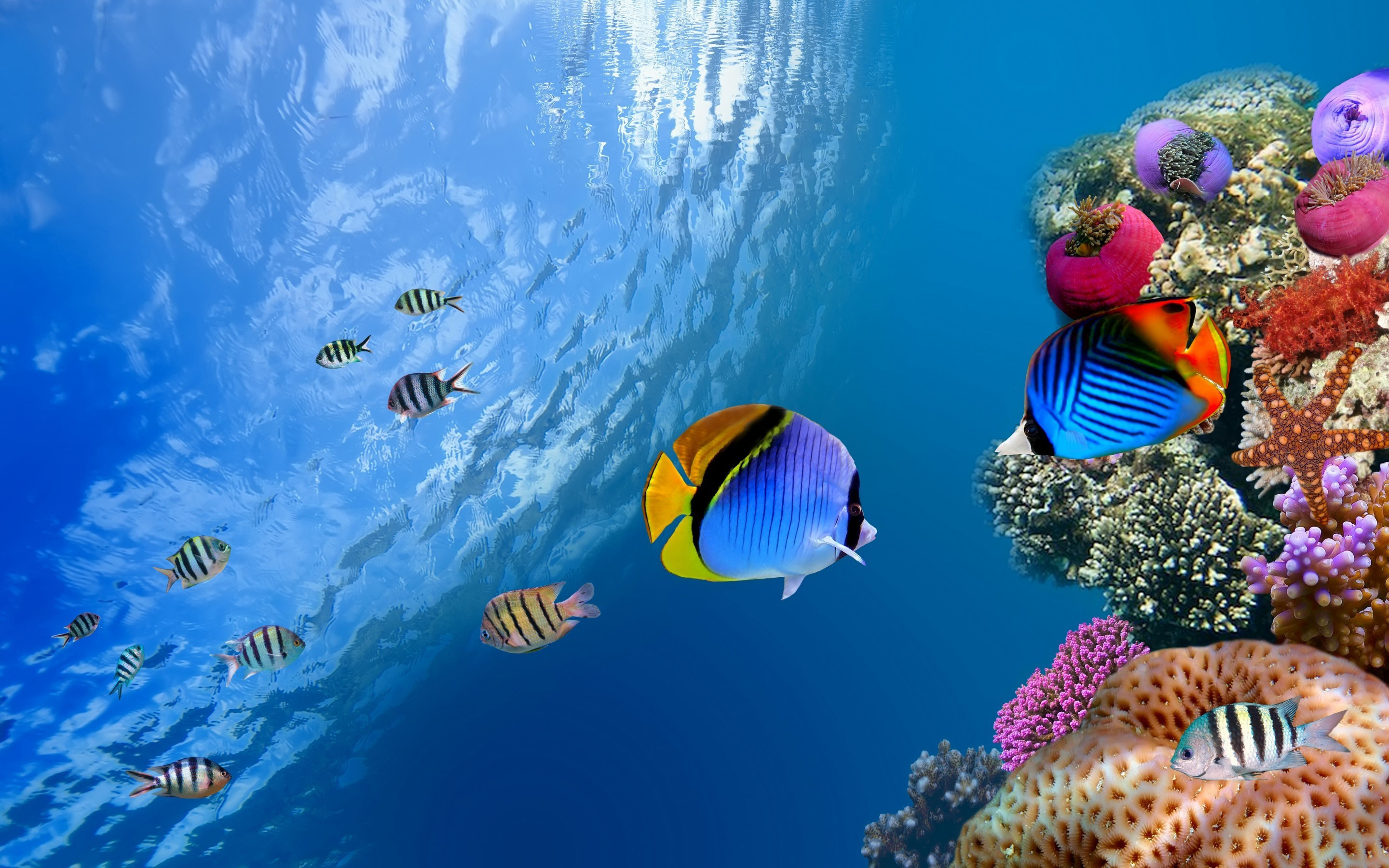 2880x1800 ... reef wallpaper hd ...