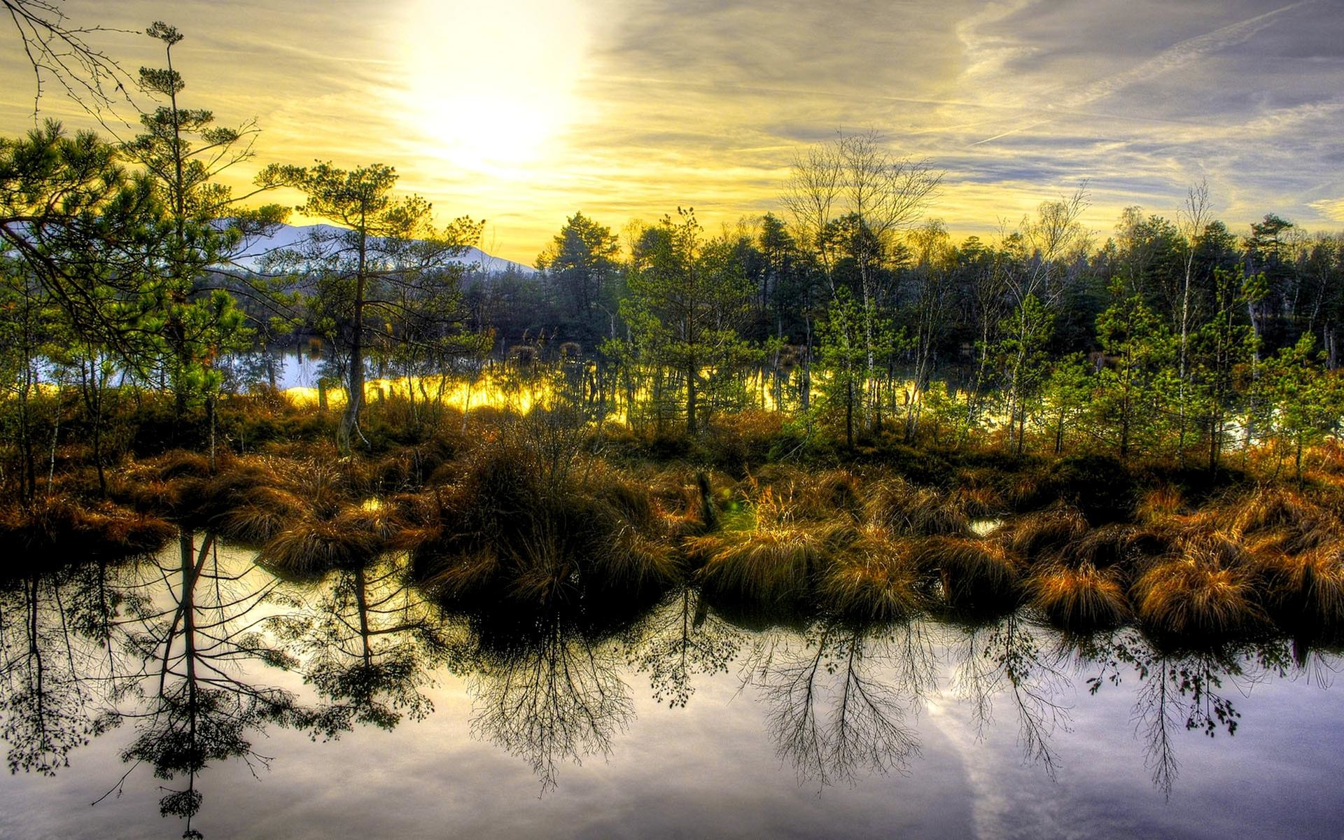 Swamp Wallpapers For Desktop 73 Images