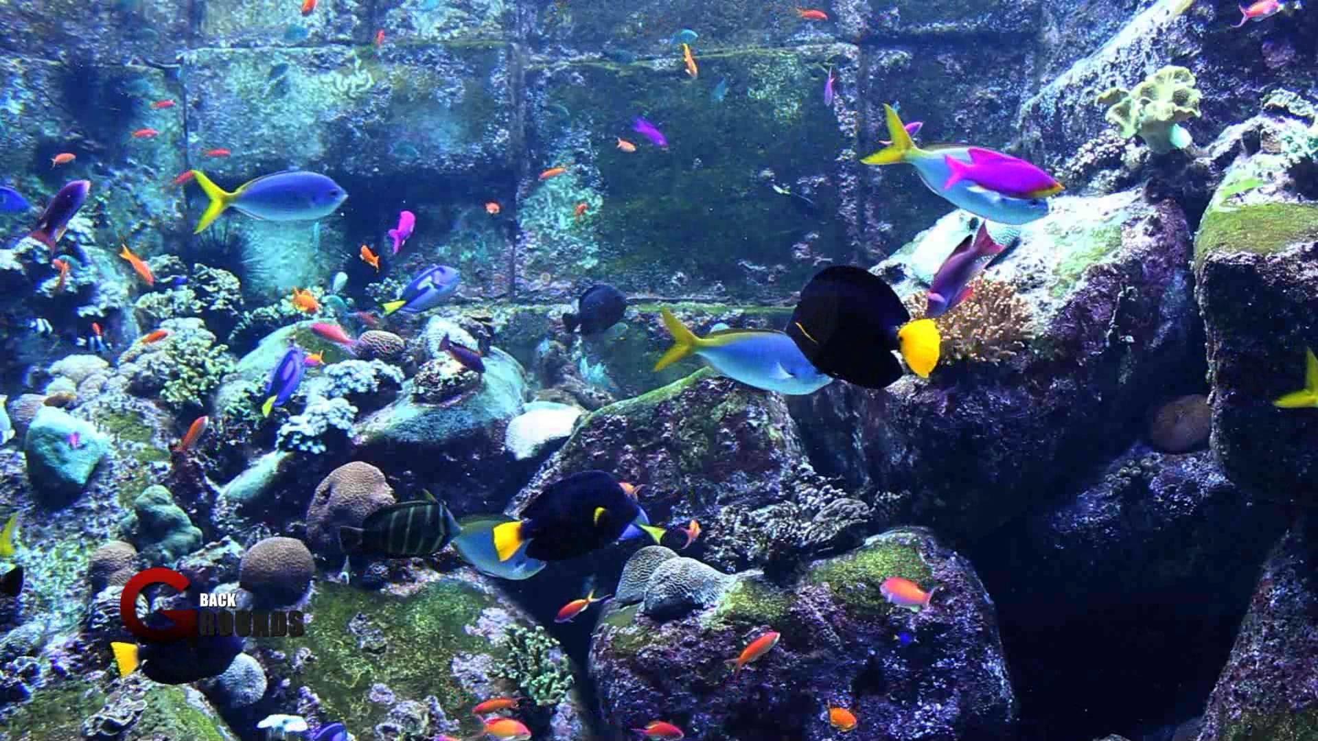 Aquarium HD Wallpapers