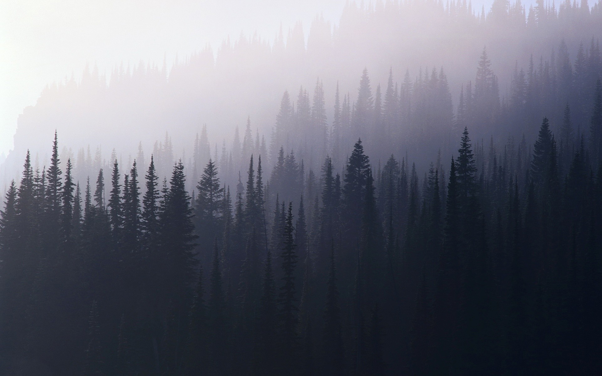 Foggy Forest Wallpaper 74 Images