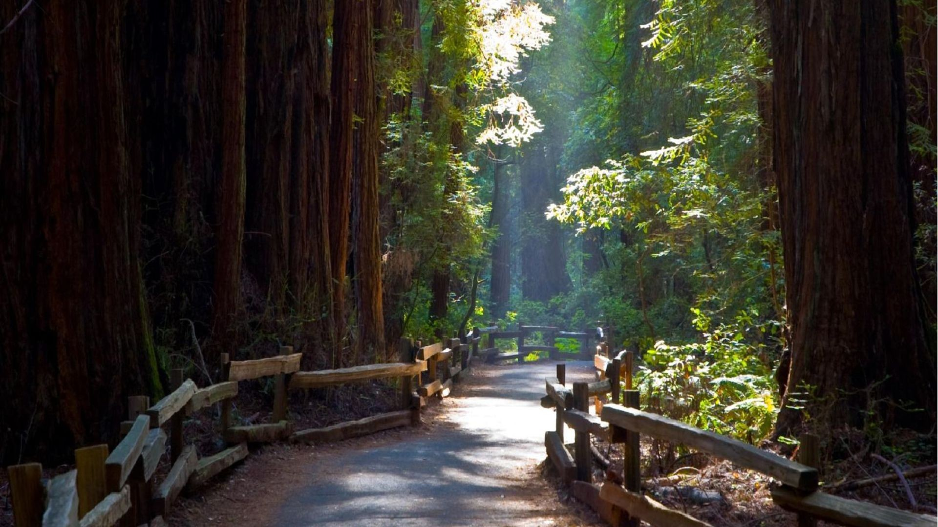 1920x1080 Path in the Redwoods, laptop photos, HD mob