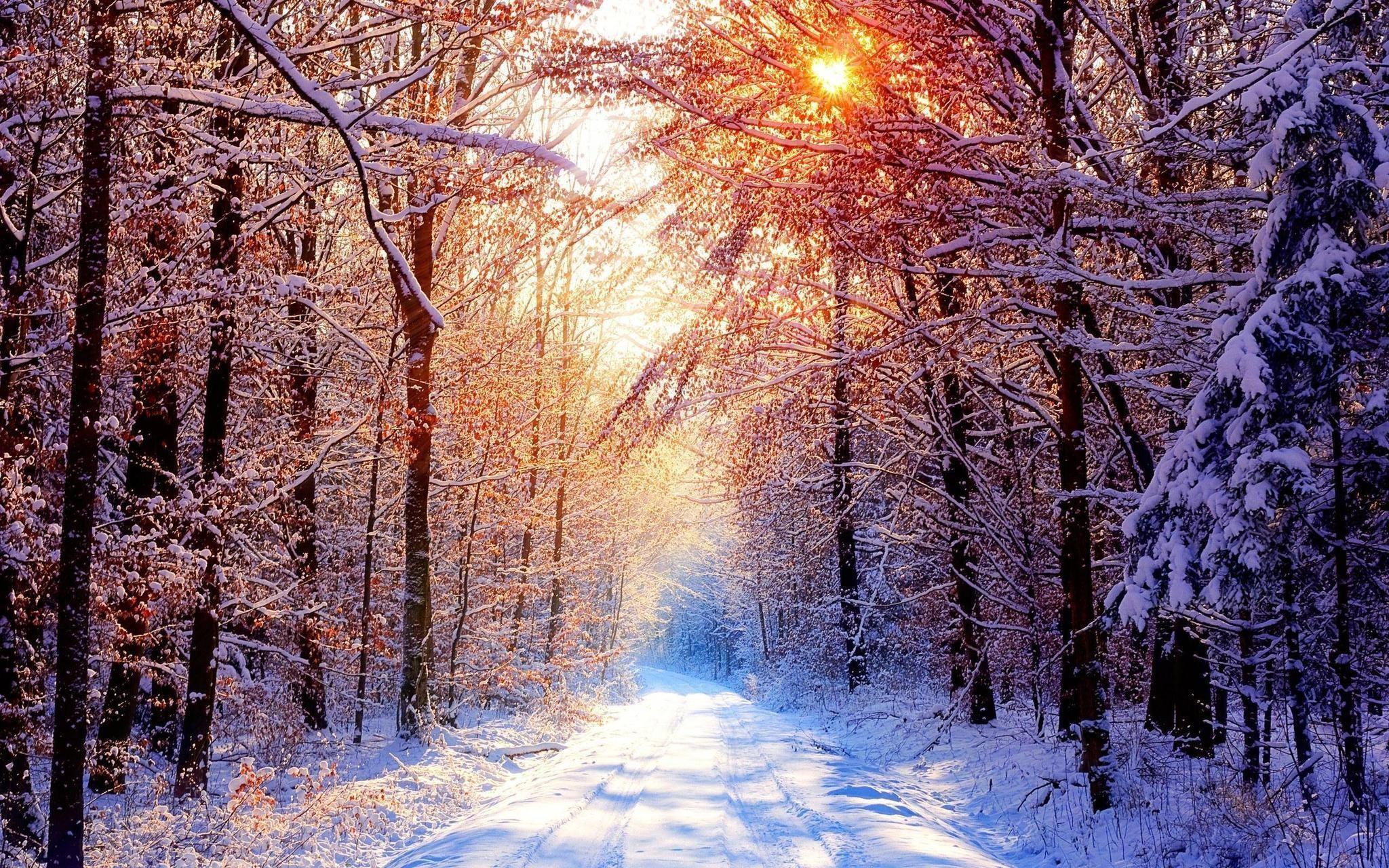 Snowy Winter Scenes Wallpaper (44+ images)