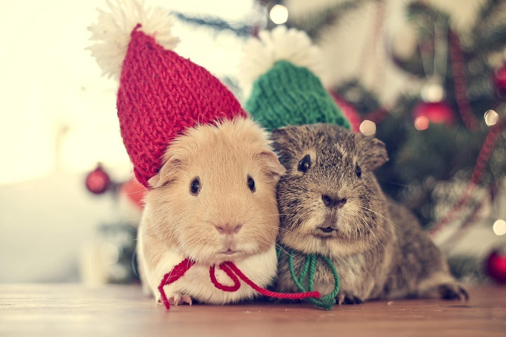 Cute christmas animals wallpaper