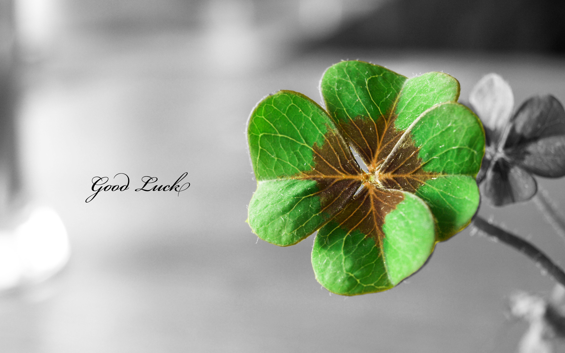 1920x1200 St. Patty's Day Background 4