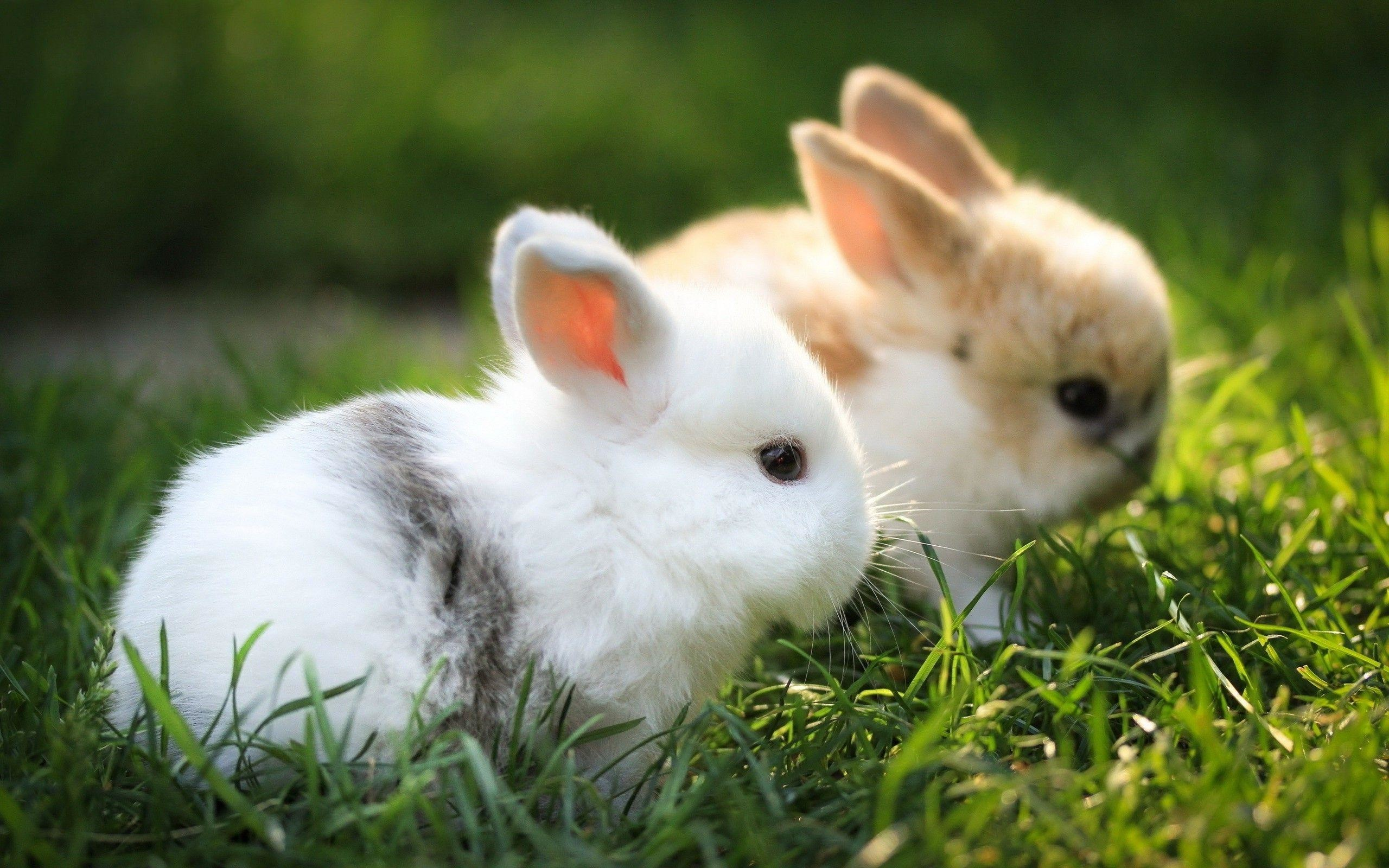 Baby Bunnies Wallpaper 67 Images