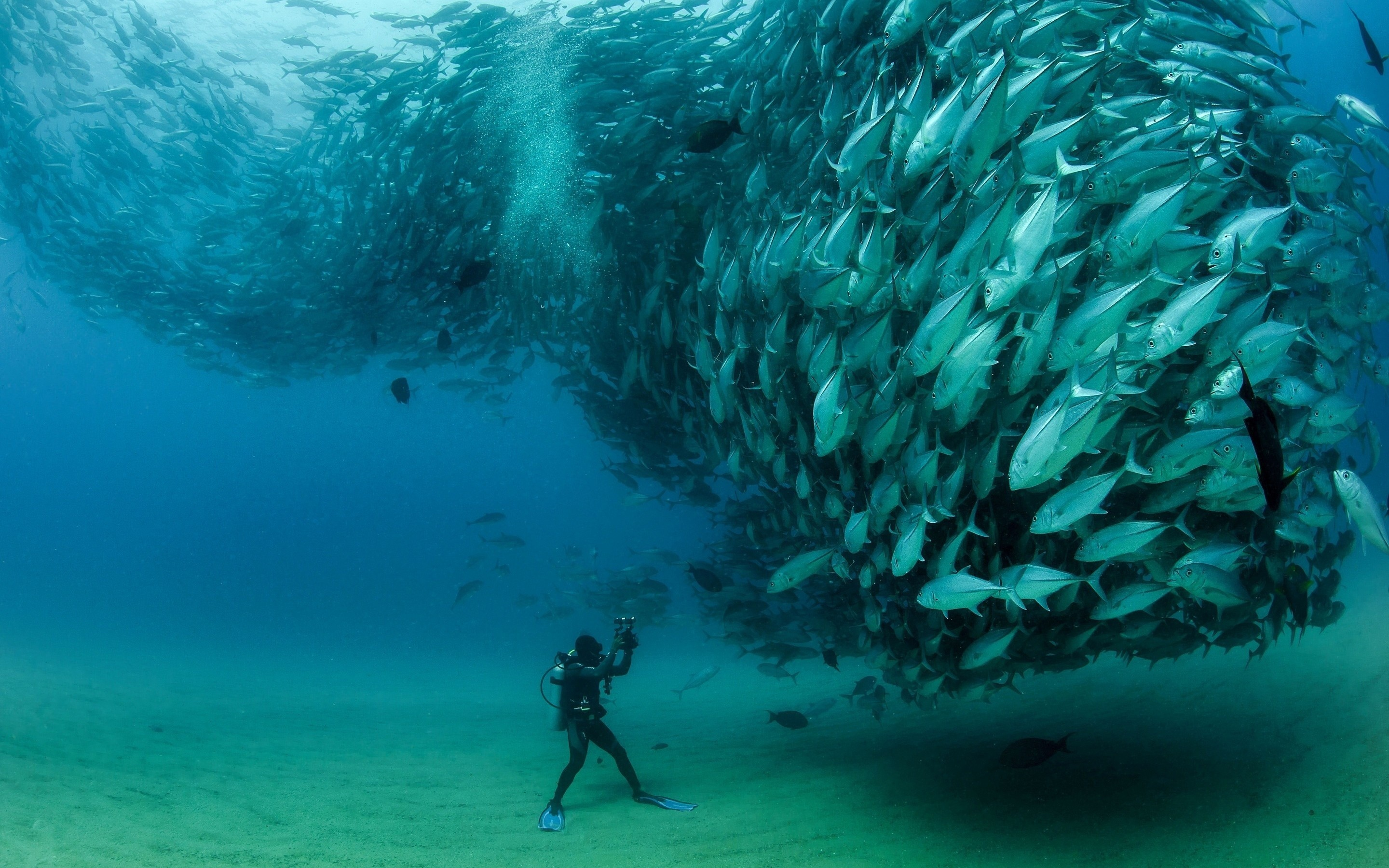2880x1800 fish, herd, flock, scuba, diver, underwater, camera