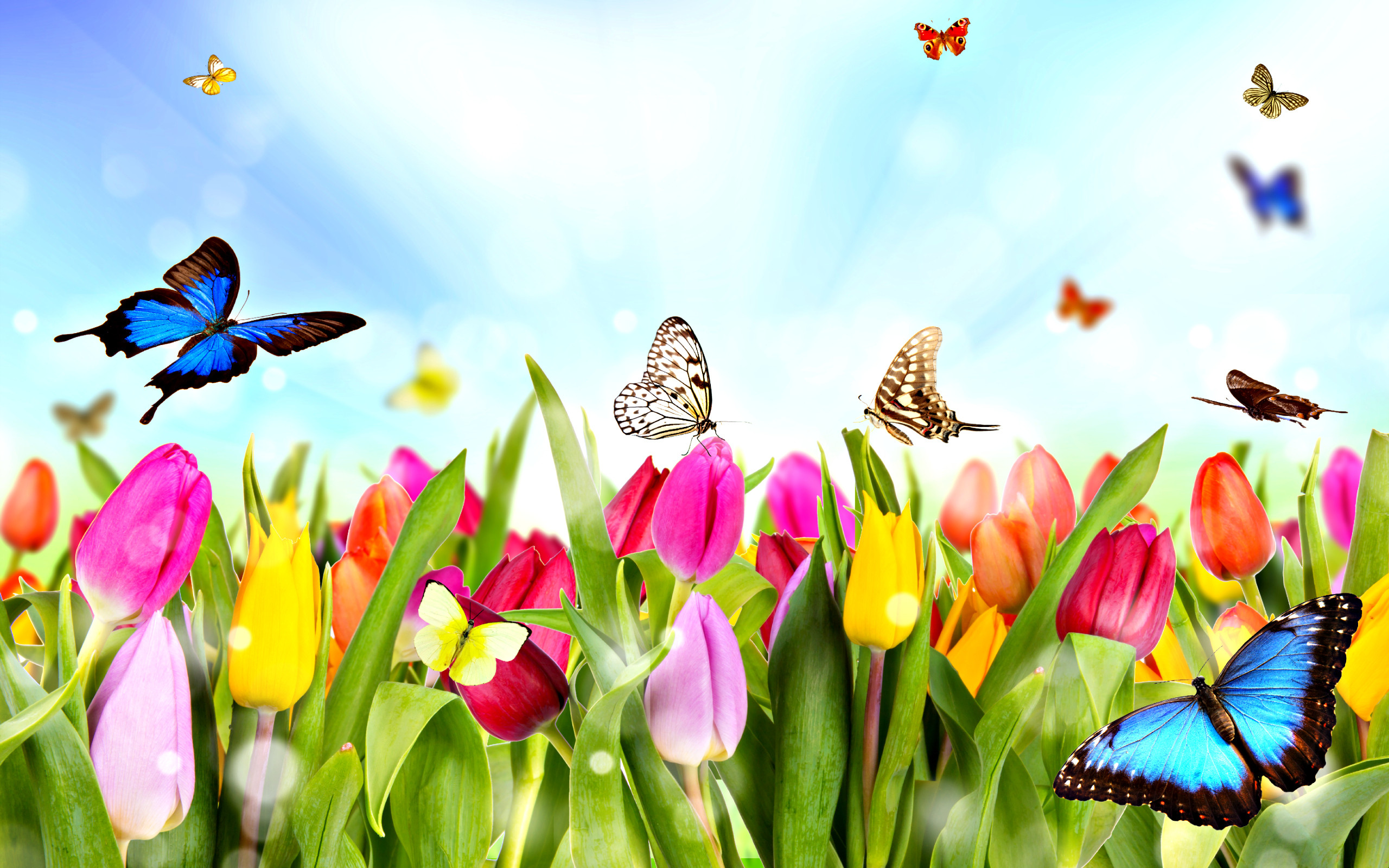 2560x1600 download hd wallpaper of spring flowers