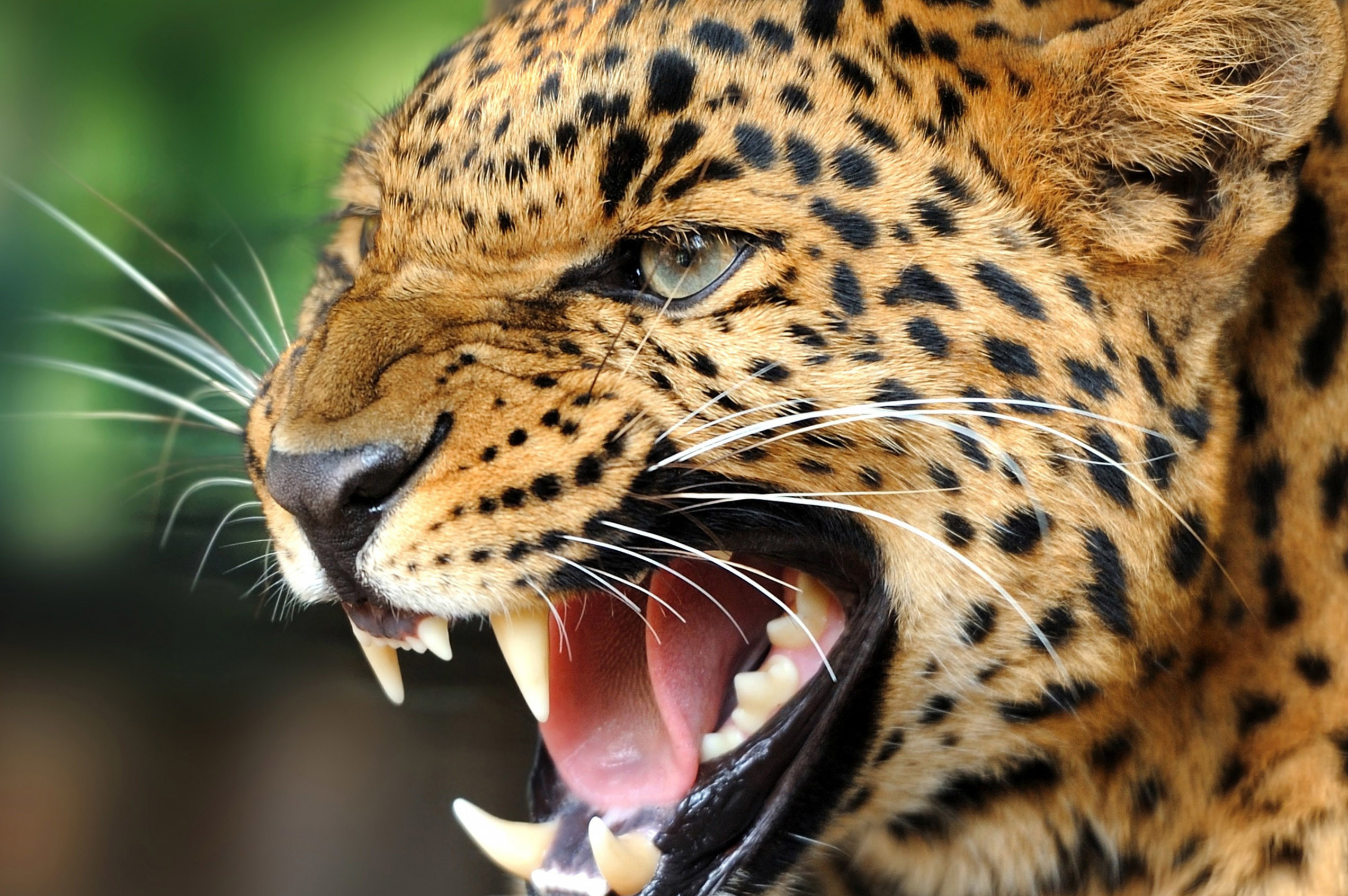 animals images hd free download