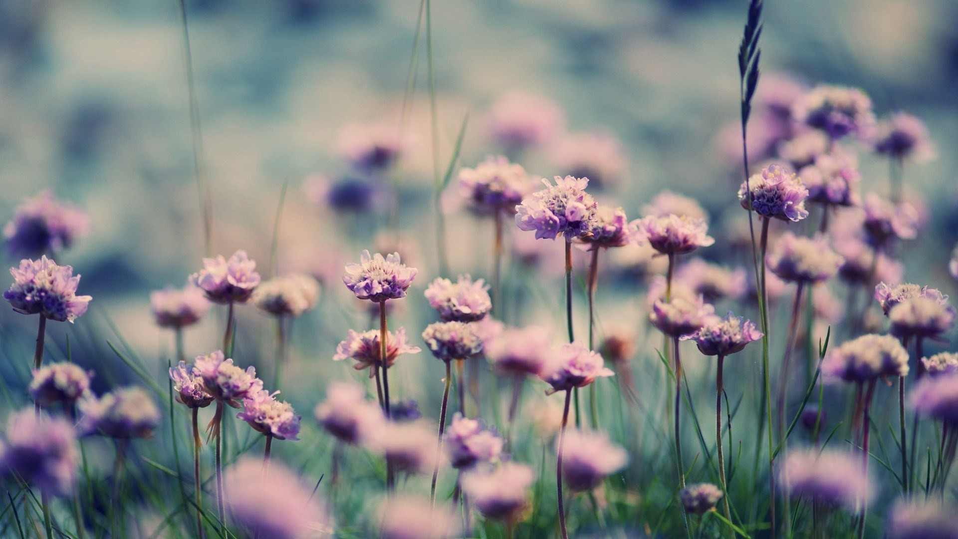 Field Of Flowers Wallpaper 58 Images