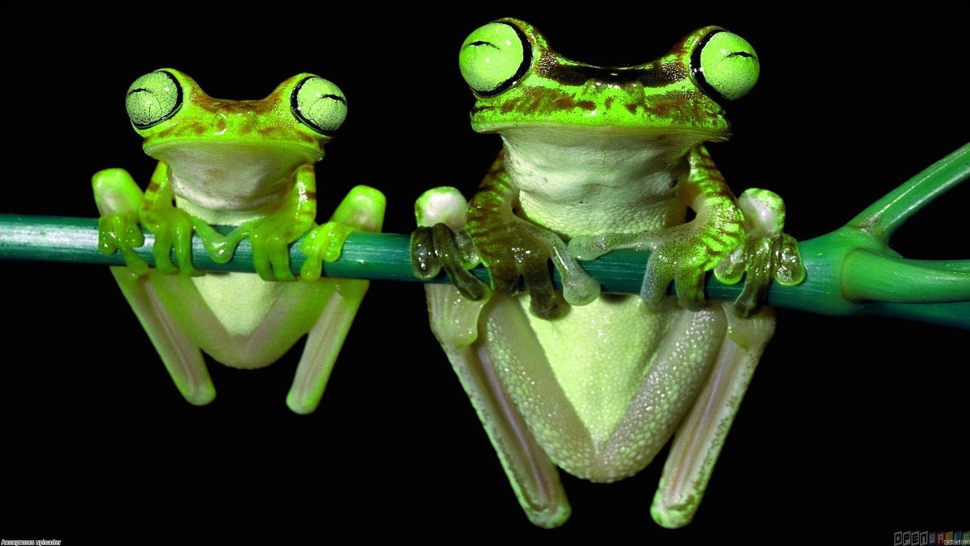 Cartoon frog wallpaper 46 images - Frog cartoon wallpaper ...