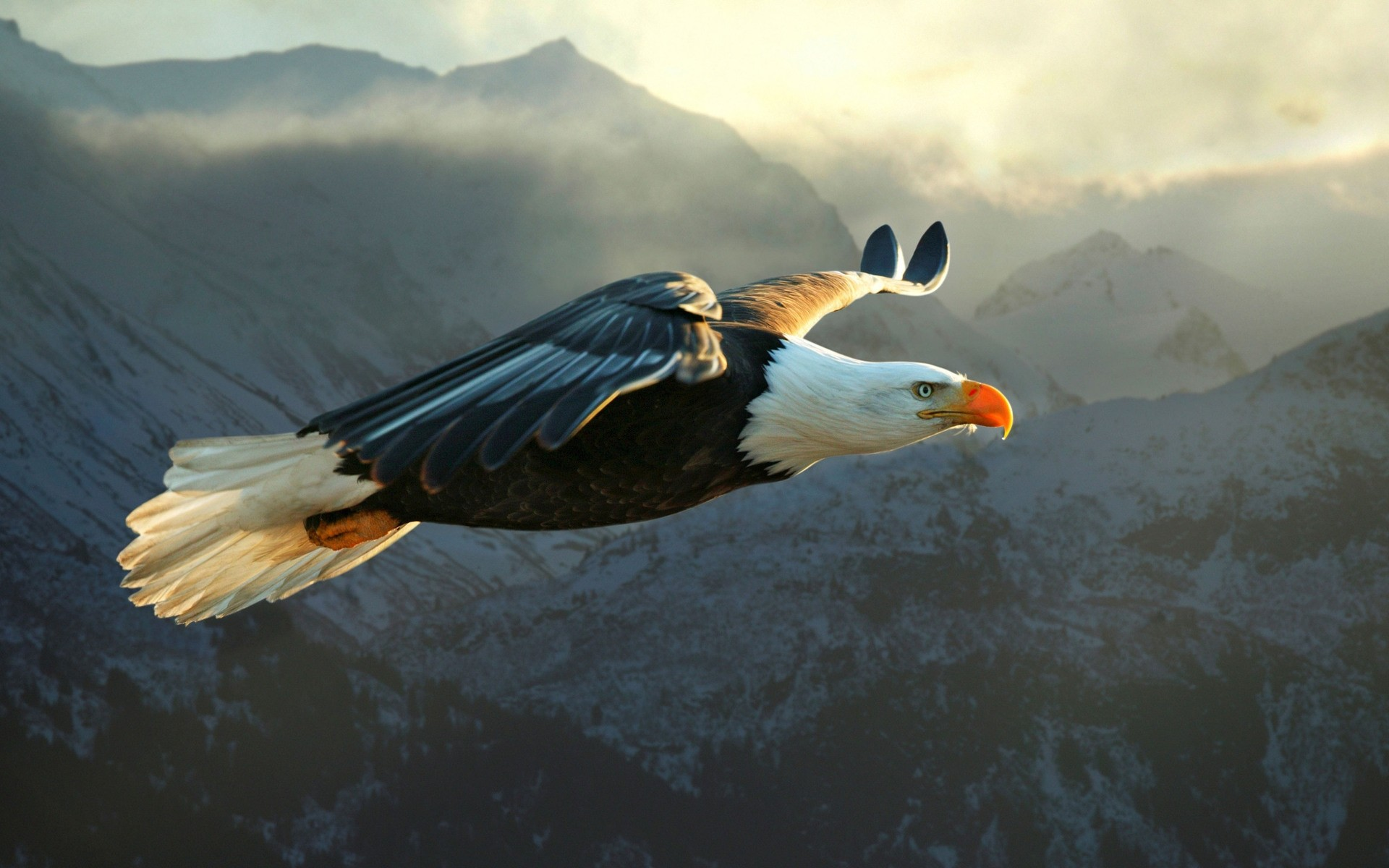 1920x1200 Eagle Wallpaper 50057