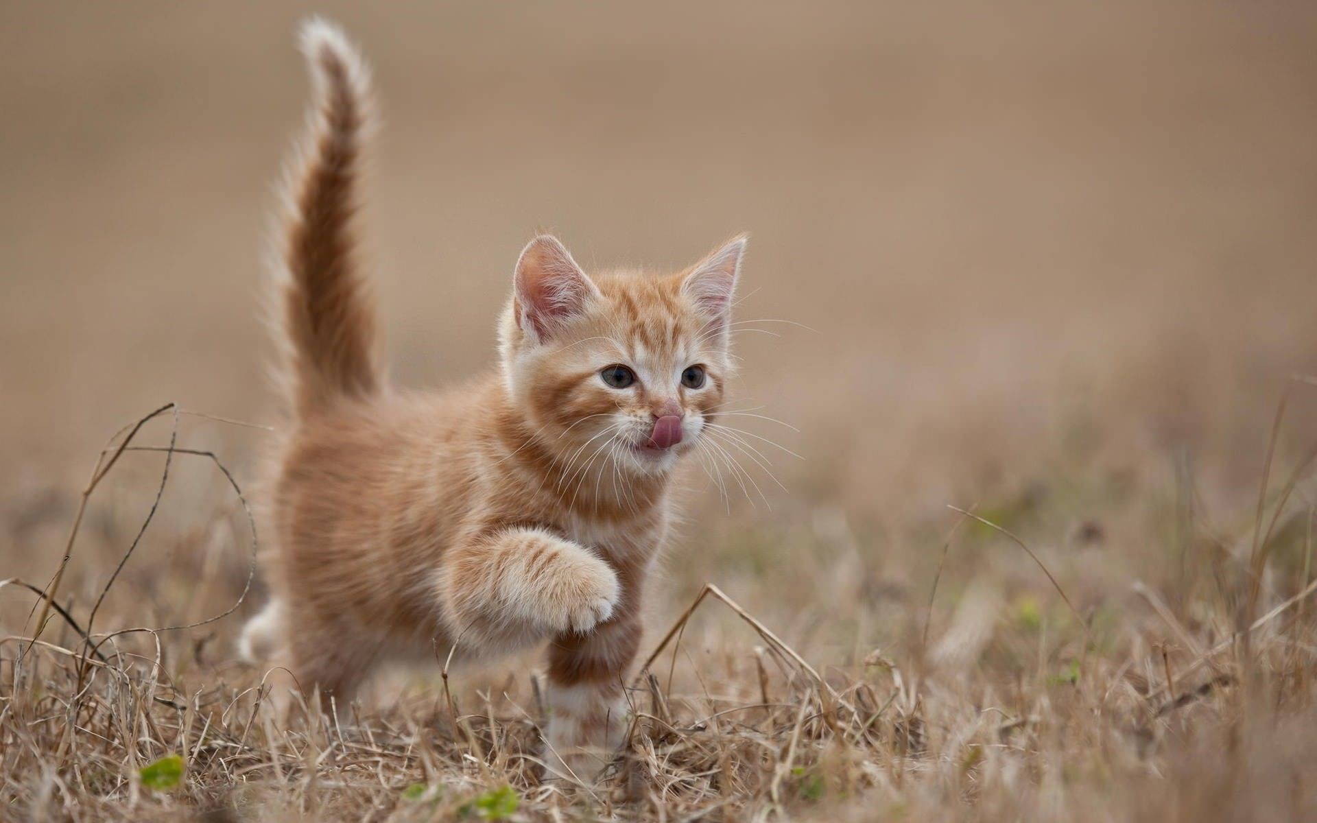 Cute kitten desktop wallpaper 60 images - Kitten backgrounds ...