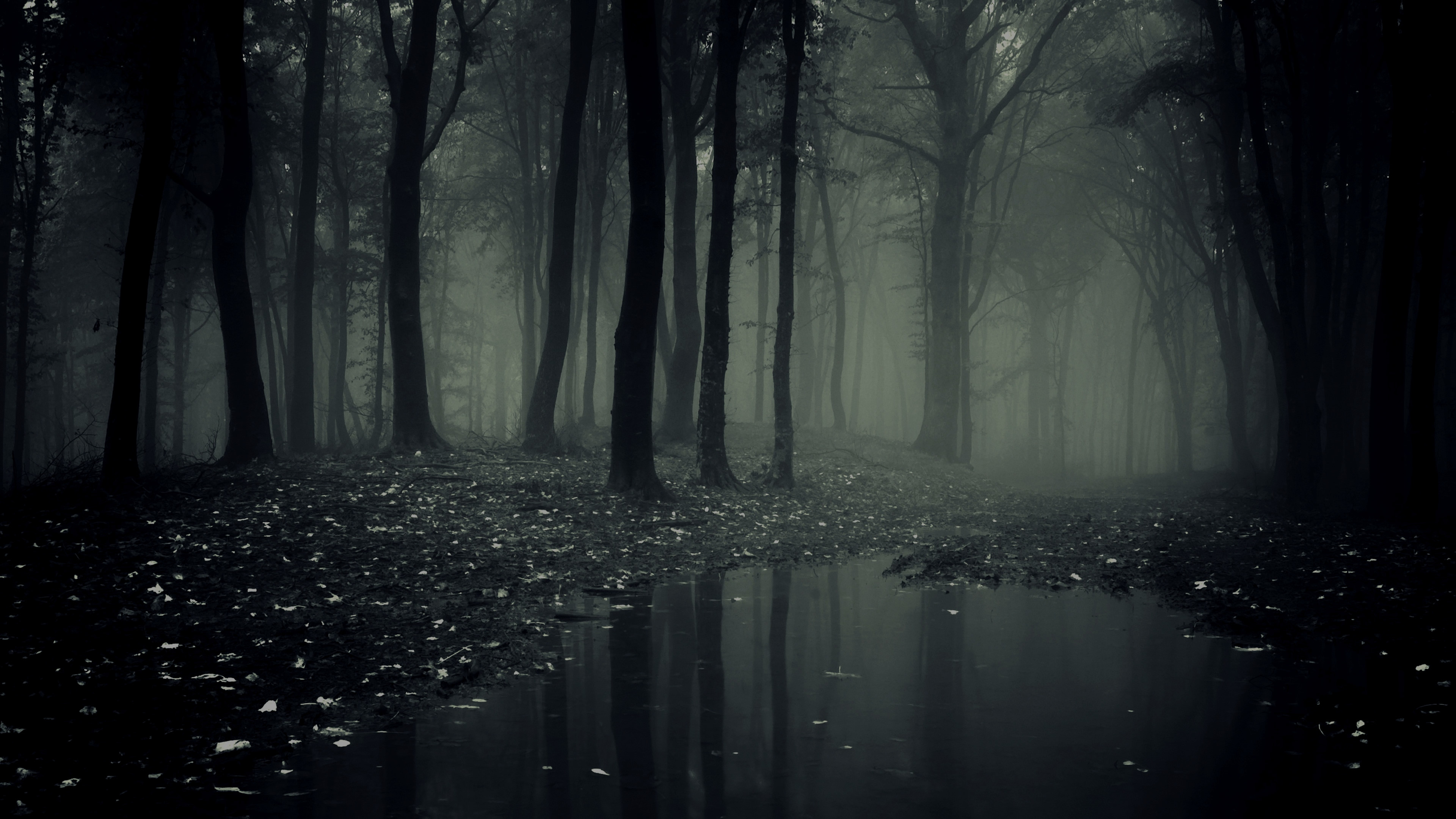 3840x2160 Explore and share Creepy Forest Wallpaper on WallpaperSafari
