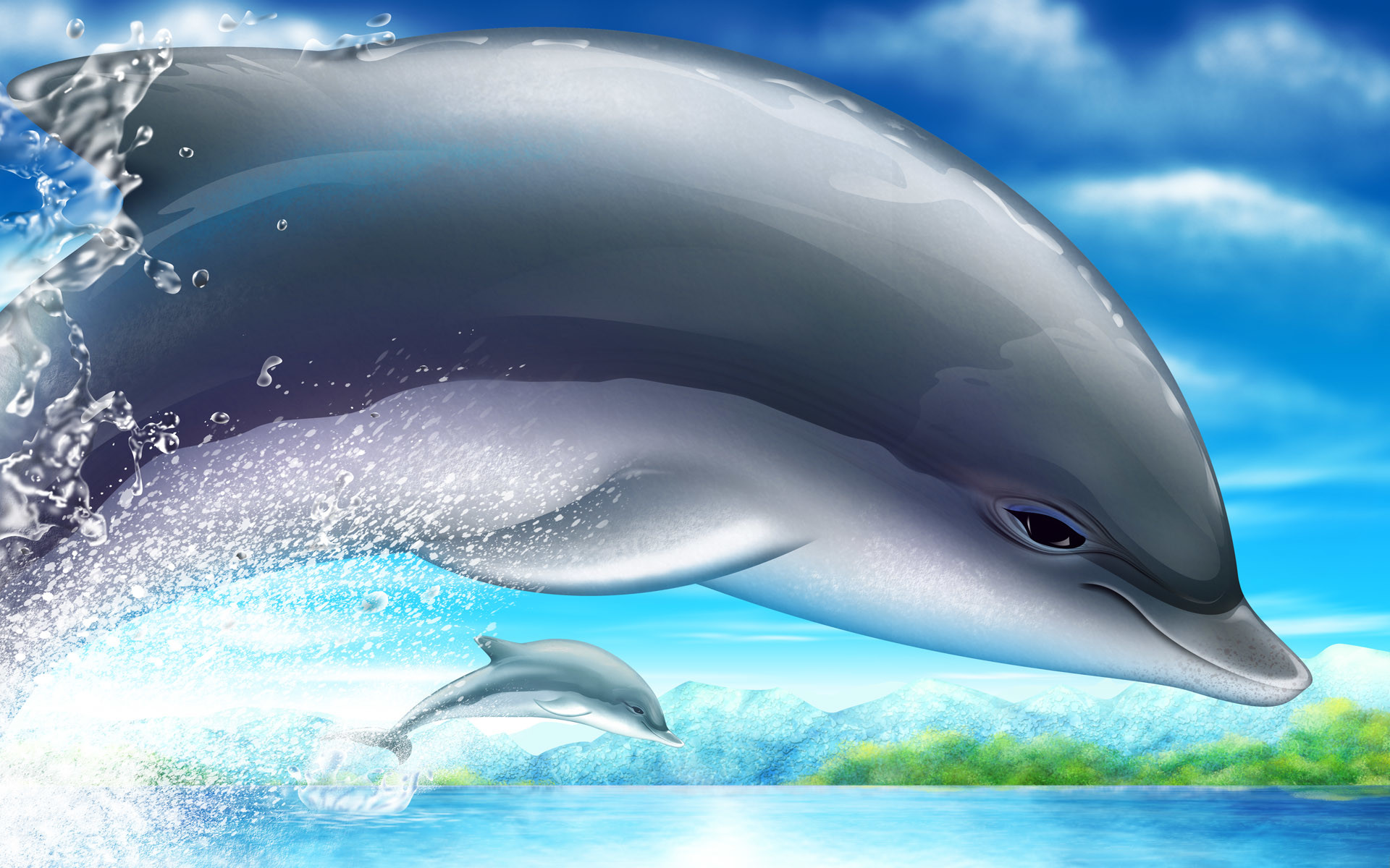 dolphin wallpaper 69 images