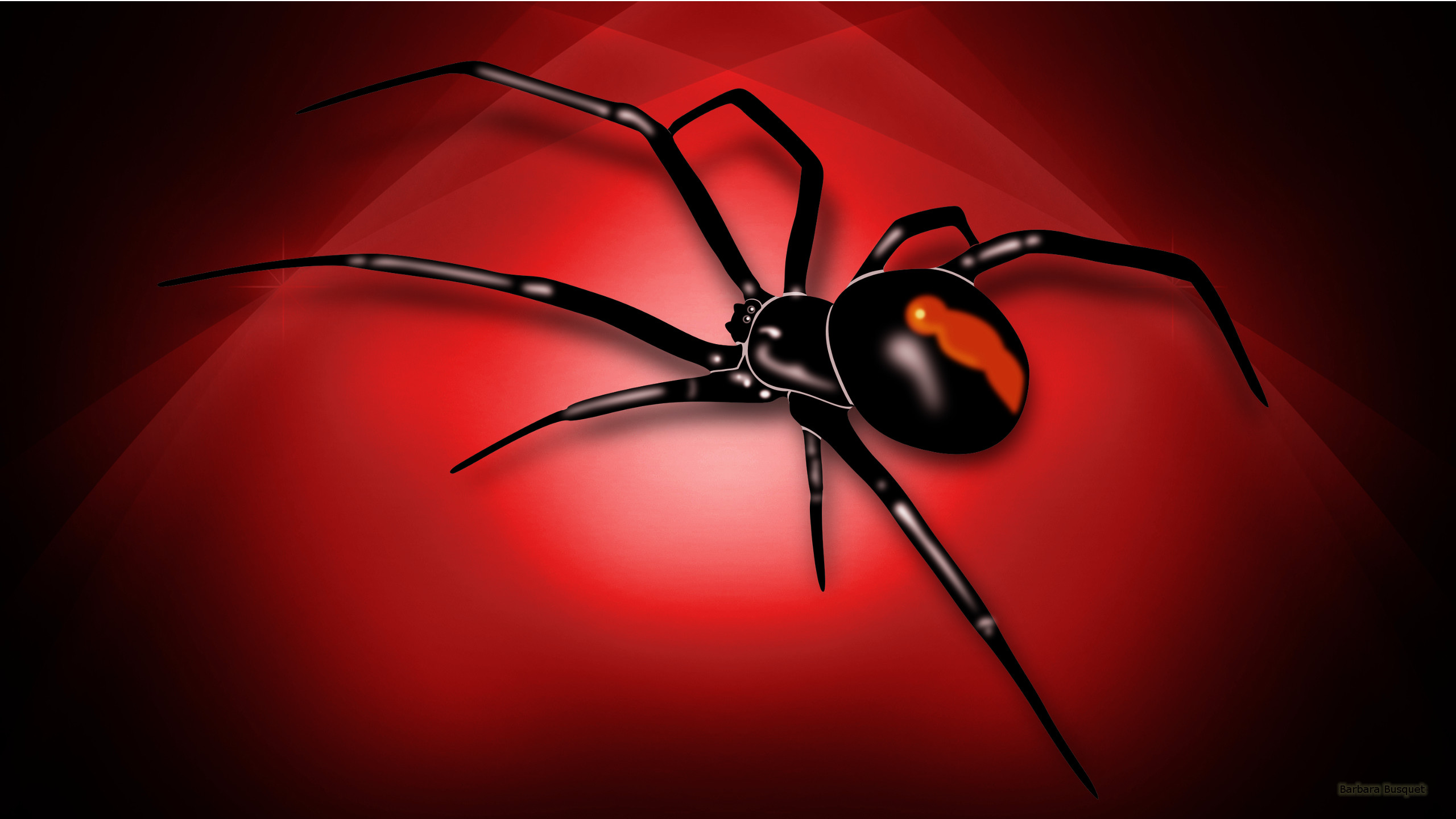 2560x1440 spider wallpaper Spiders Nature Wallpaper Collection 2560×1440 Spider  Wallpaper (42 Wallpapers) |