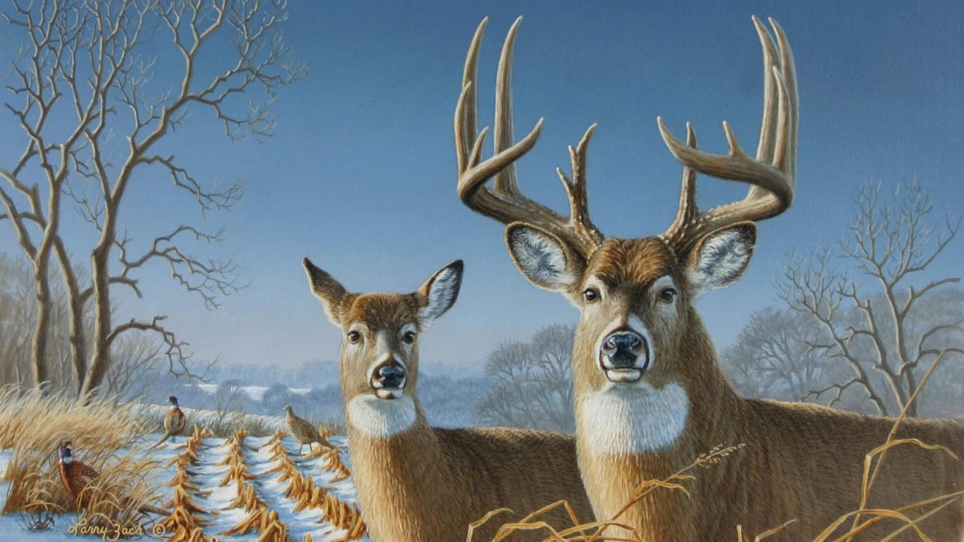 1920x1080 Whitetail Deer Wallpaper Whitetail Deer Backgrounds for PC HD
