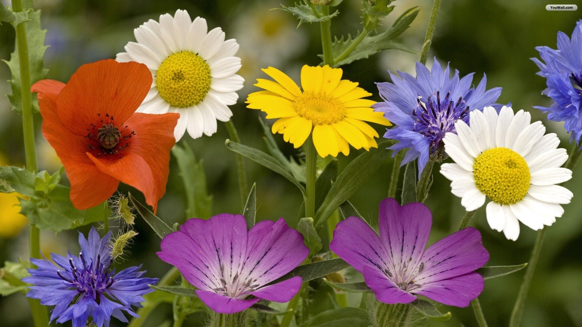 1920x1080 Pretty Spring Flowers Wallpaper