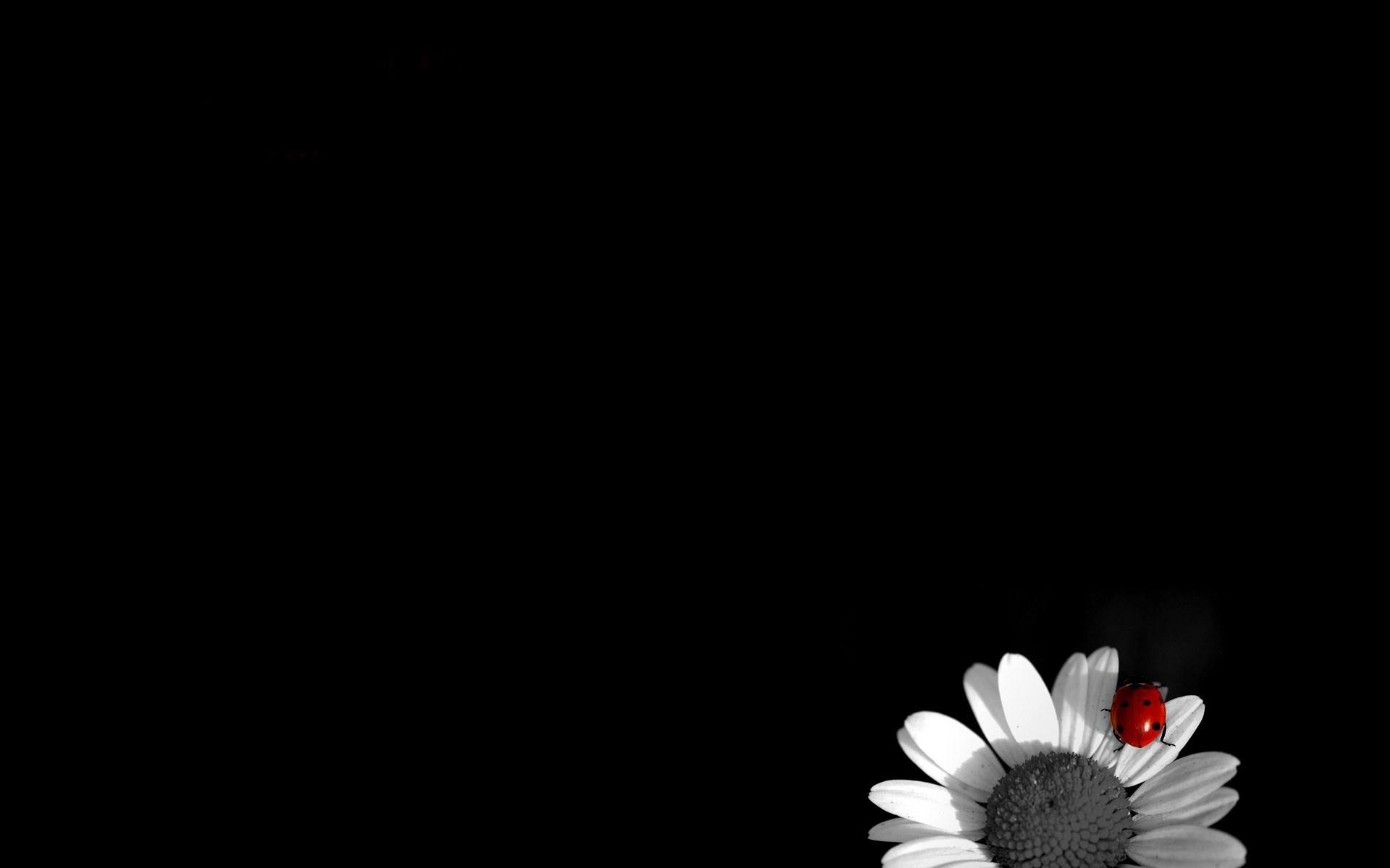 Black Wallpaper Pc Pinterest