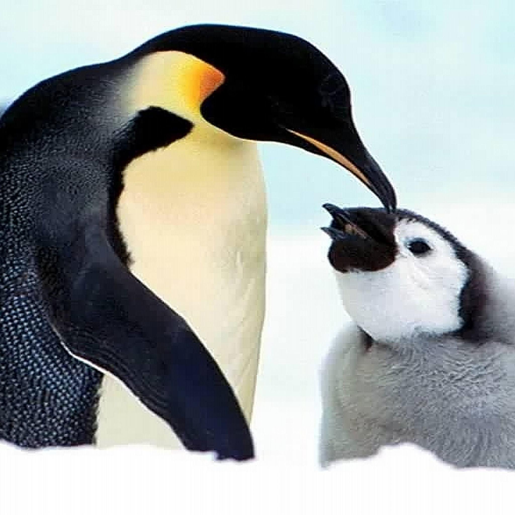 Cute Penguin Backgrounds (38+ Images