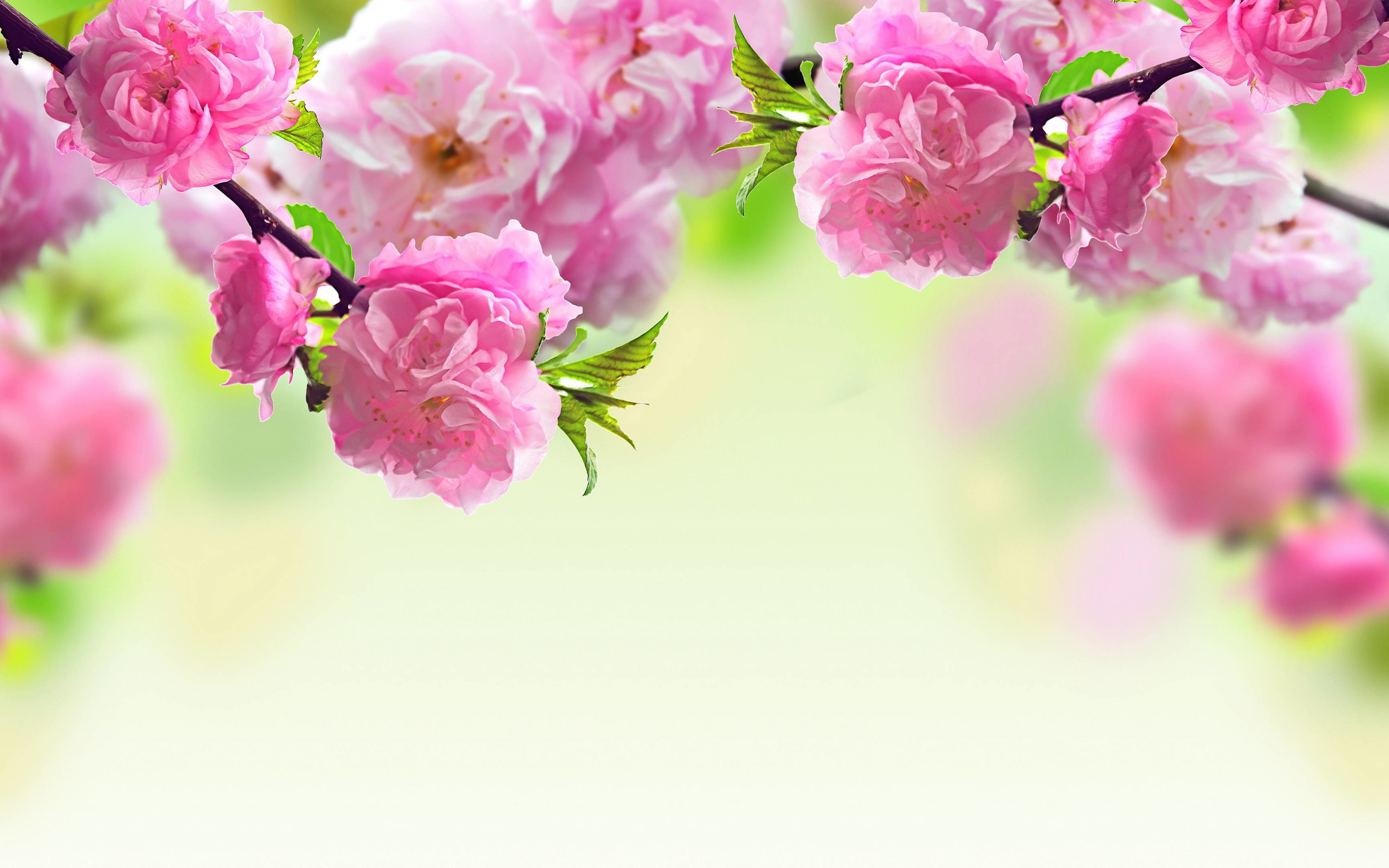 3456x2160 Spring Flowers Background Wallpaper - HD Wallpapers|WallForU.com