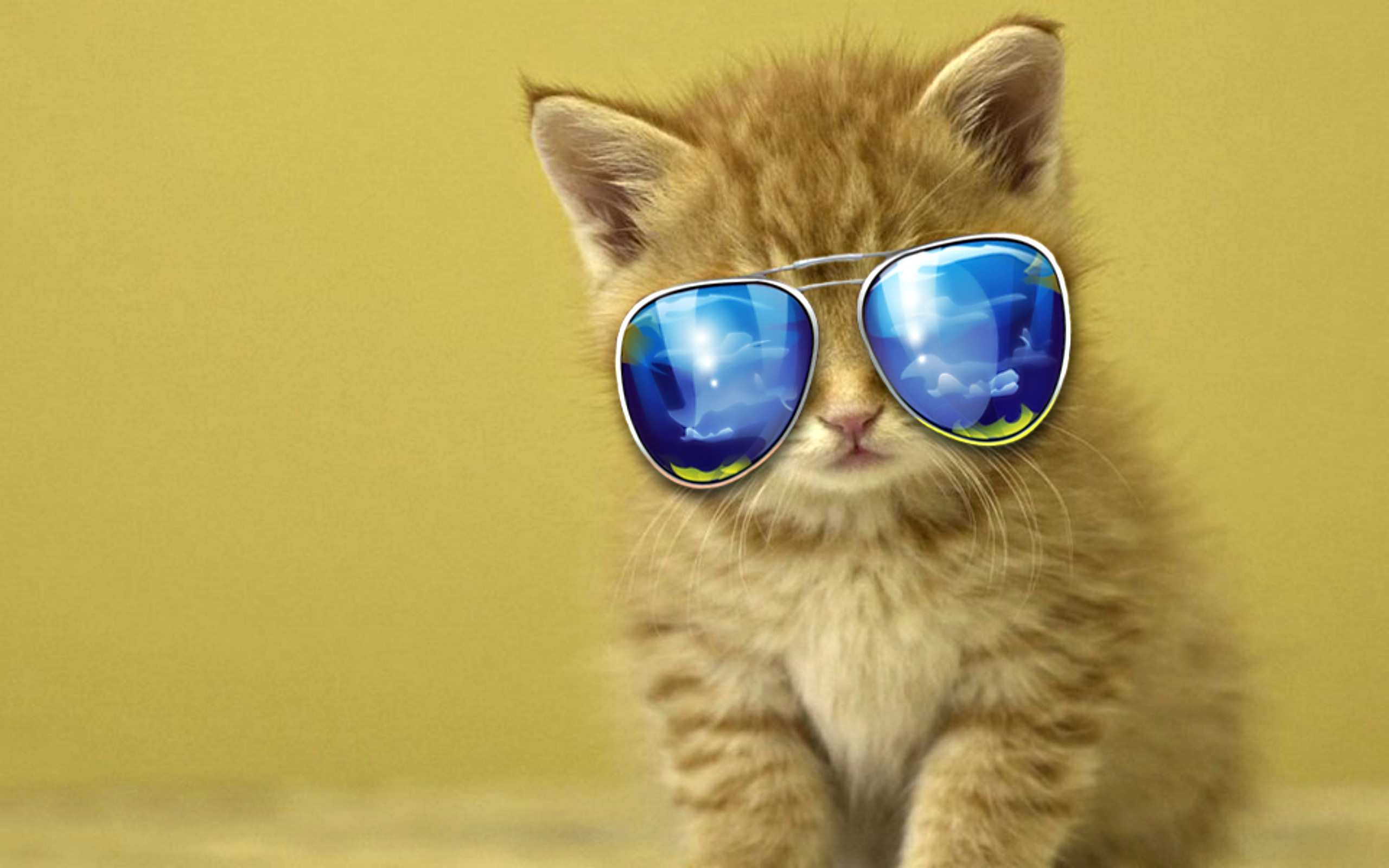 Funny And Cute Cat Pictures 21 Background: Cool Cat Wallpaper (71+ Images