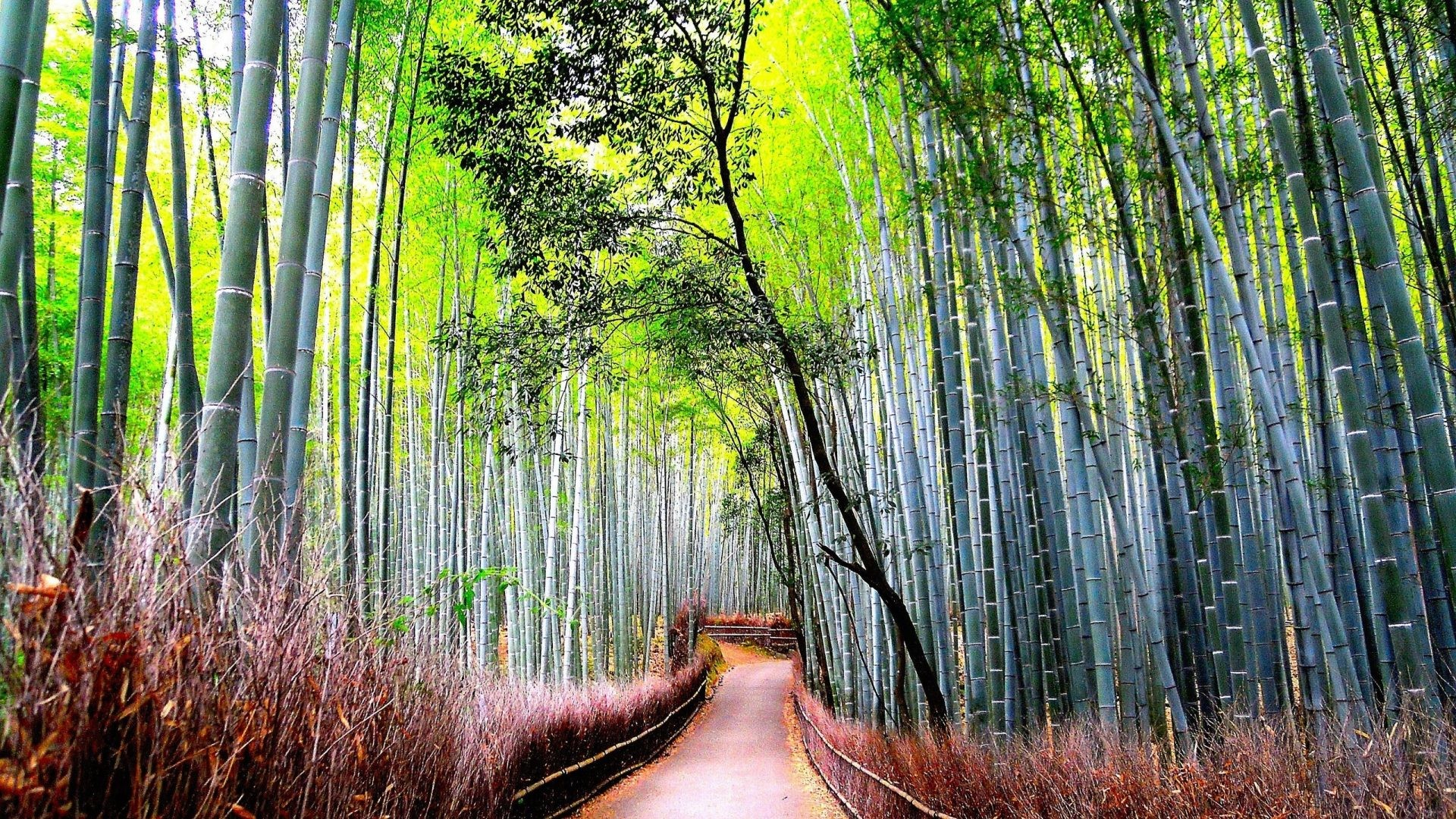 1920x1080 Bamboo Tag - Nature Forest Bamboo Road Beautiful Hd Desktop Wallpaper for  HD 16:9