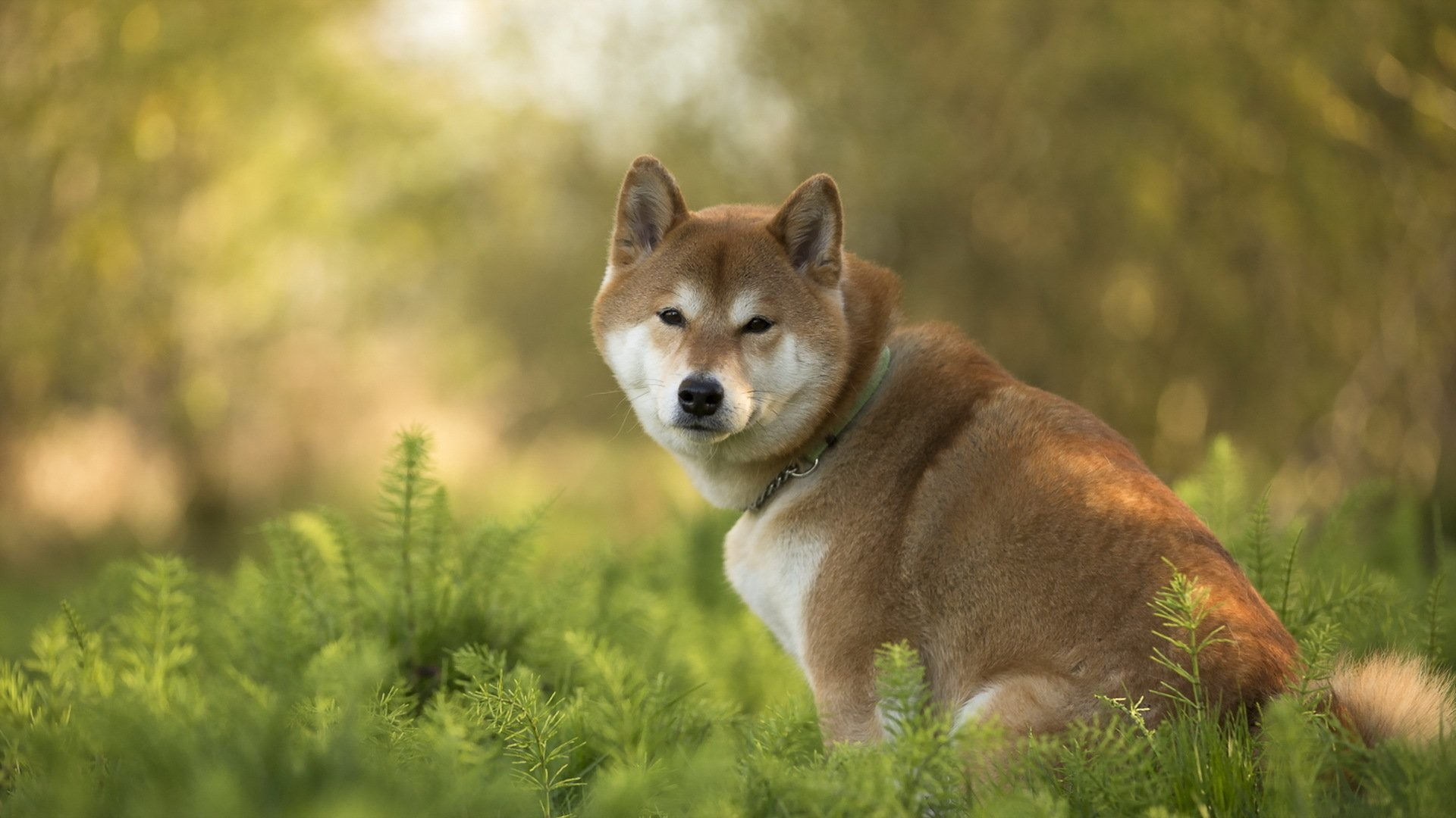 Doge Wallpaper HD 77 Images