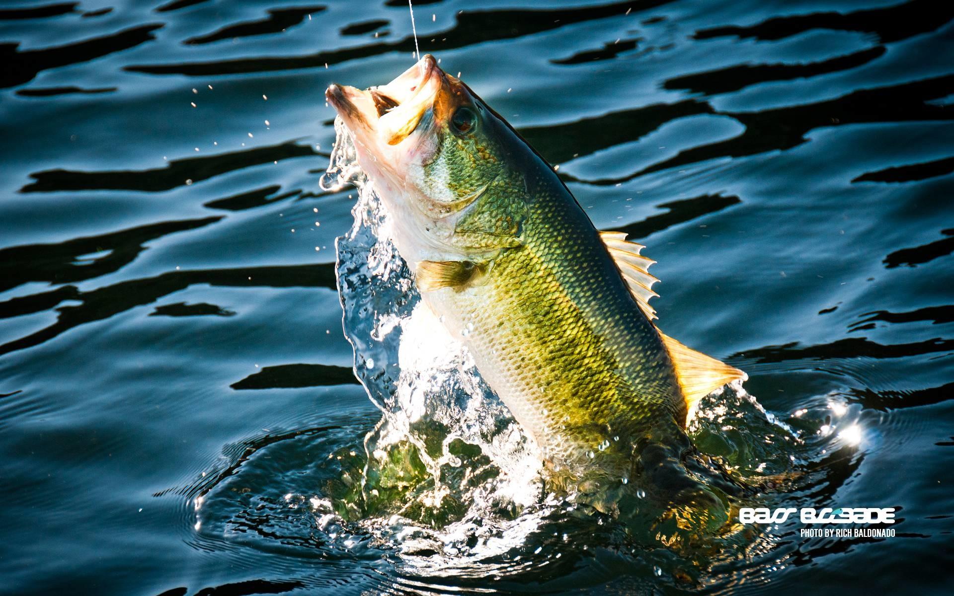 Bass Fishing Wallpaper HD 63 images