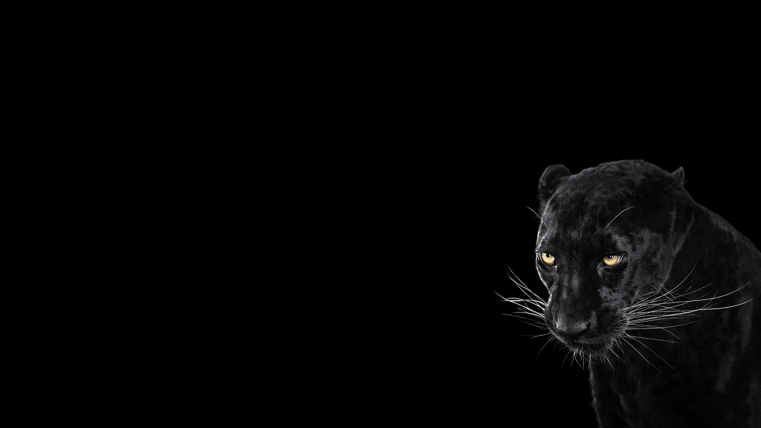 Black Jaguar Wallpaper 82 Images