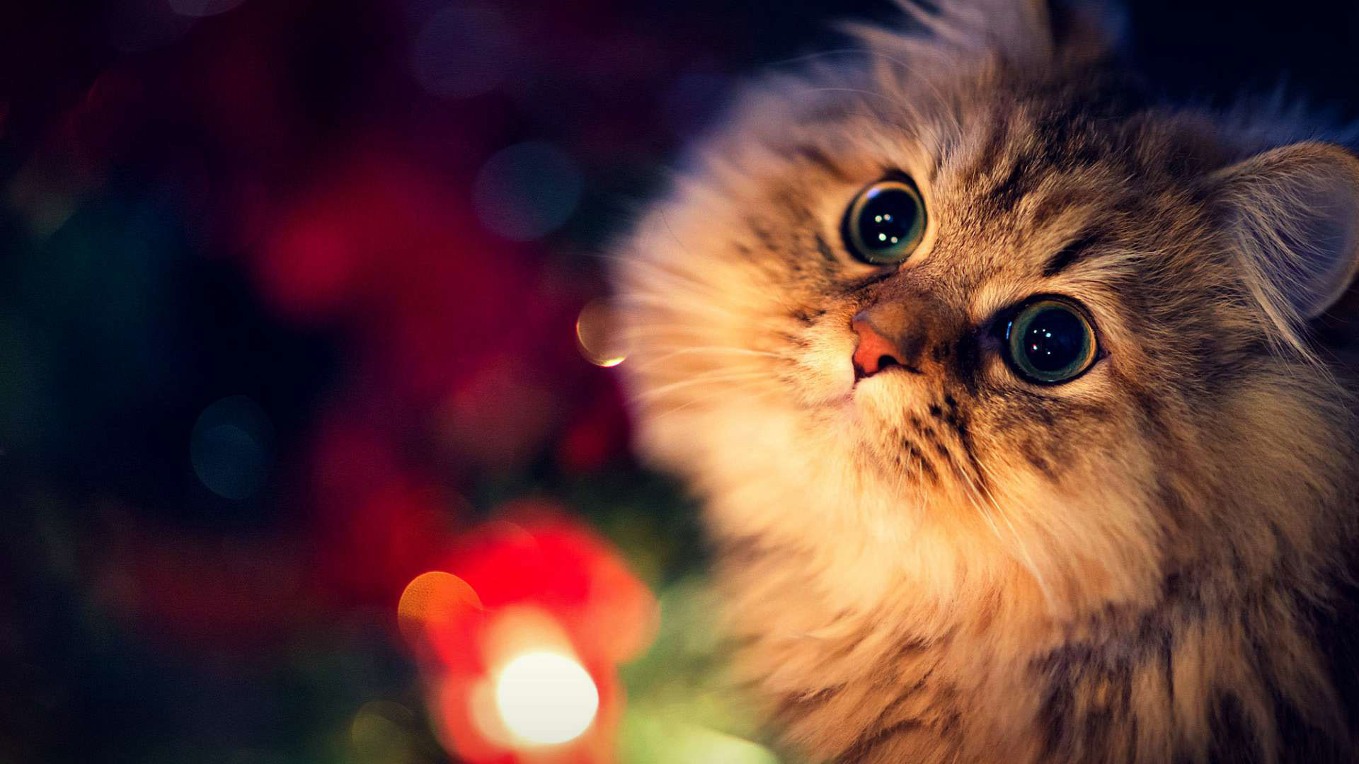 Cute Cat Background (67+ images)