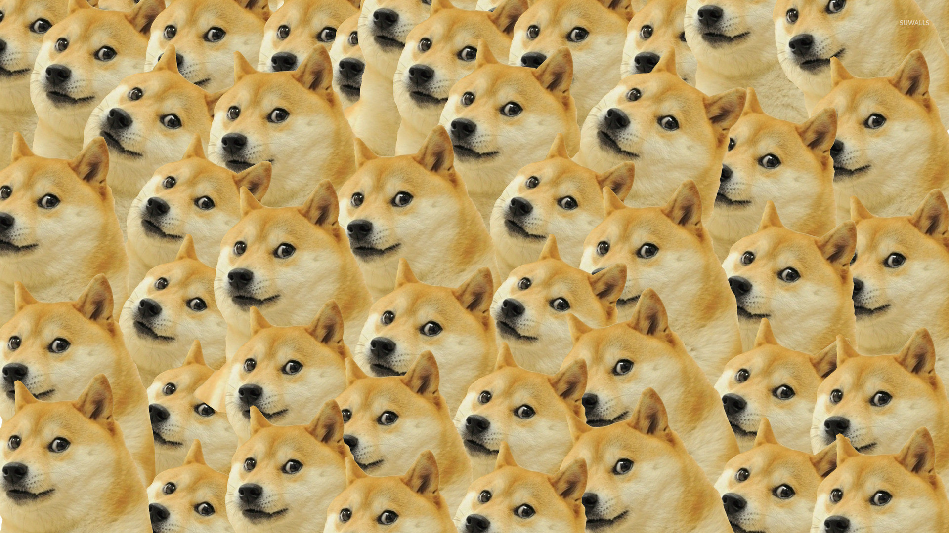 doge meme wallpapers pattern