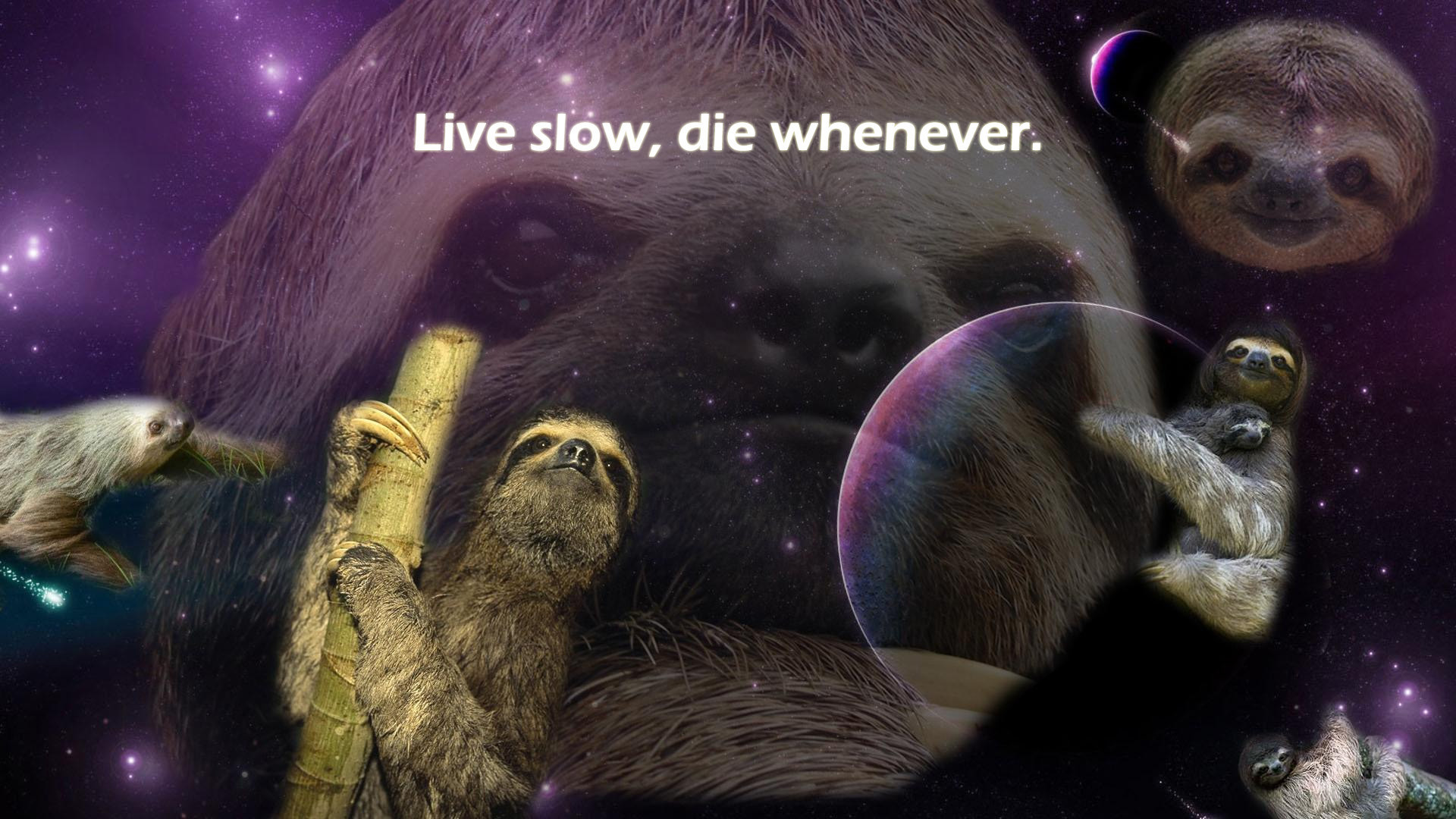 1920x1080 sloth wallpaper HD