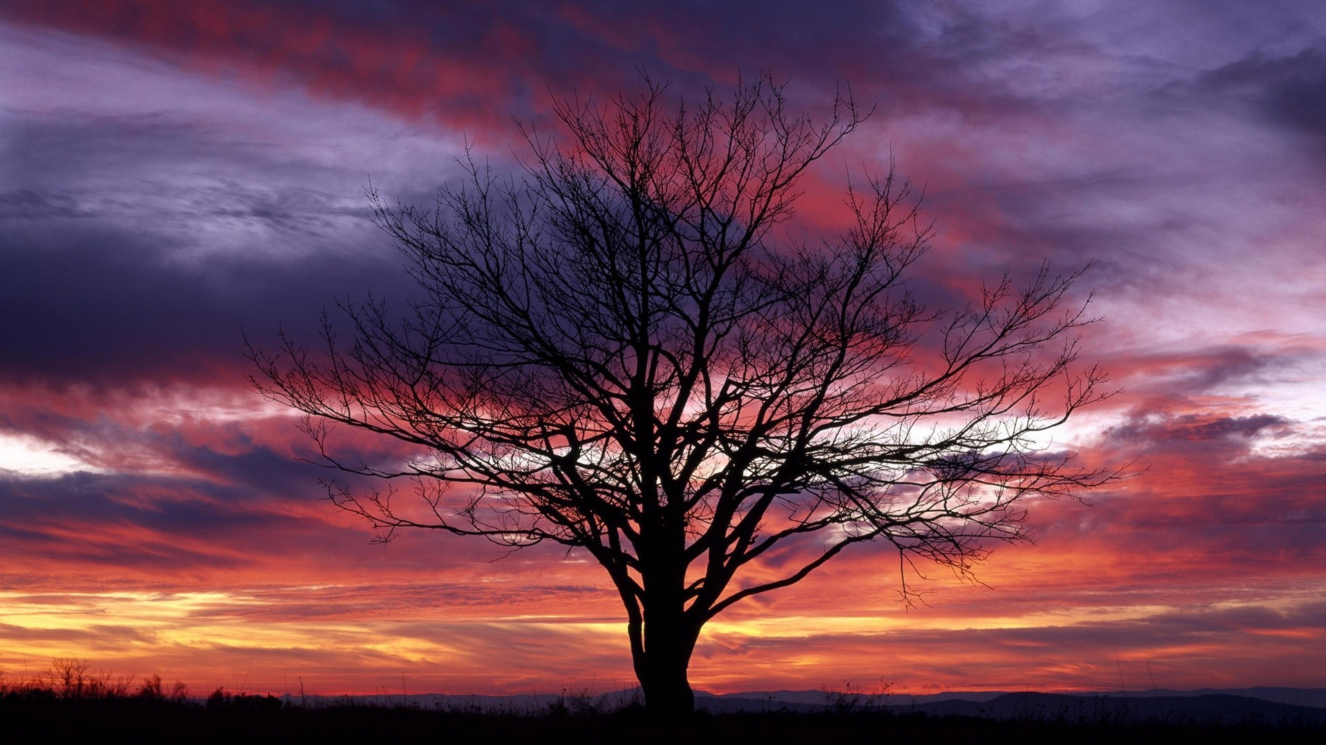 1920x1080 Red Tag - Purple Red Sunset Trees Sunsets Tree Nature Sky Picture Download  for HD 16