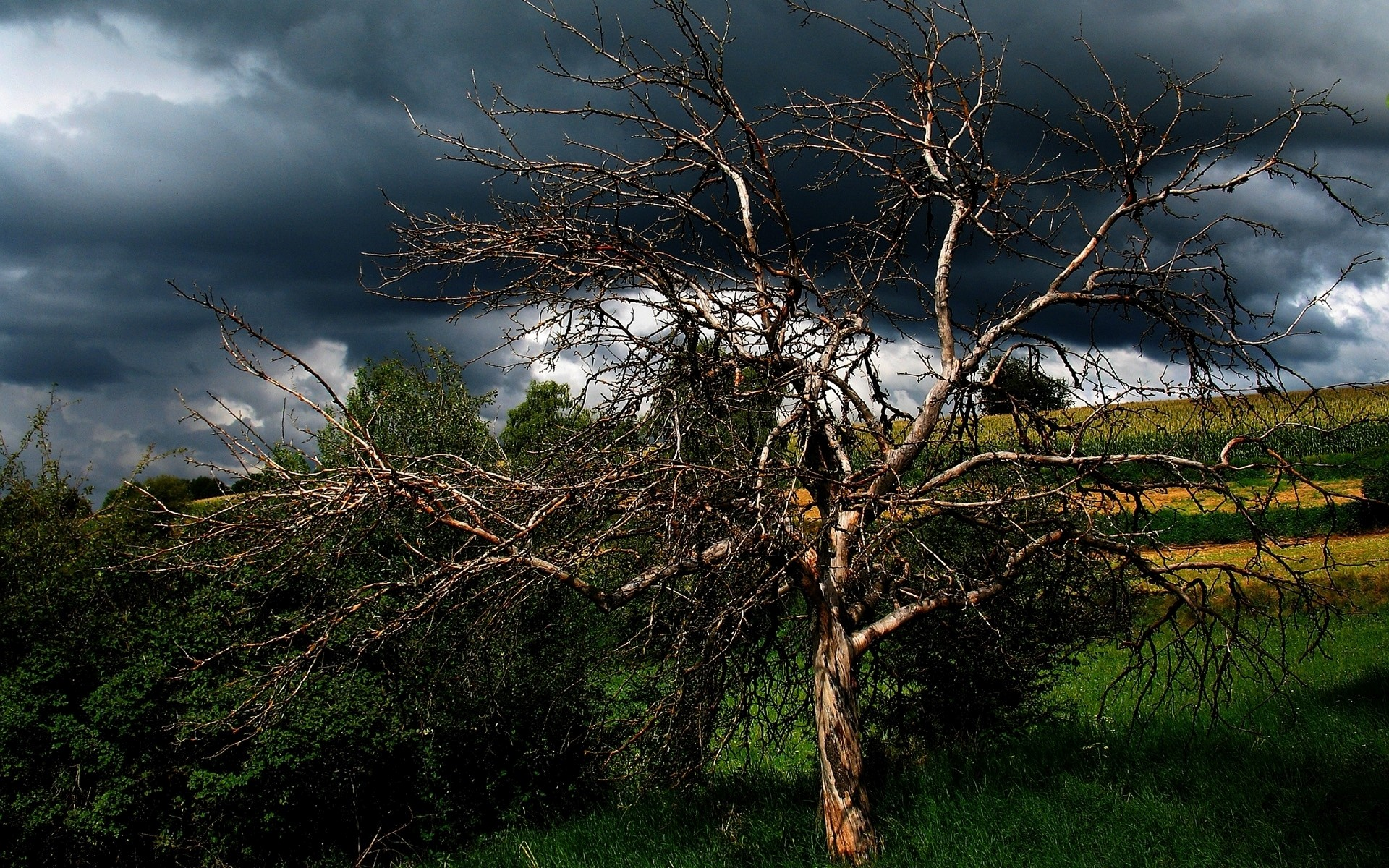 1920x1200 Splendid Tree Field Stormy Sky wallpapers and stock photos