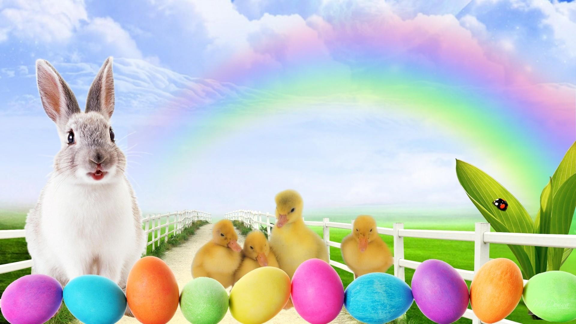 1920x1080 easter bunny hd background wallpaper 12149 baltana