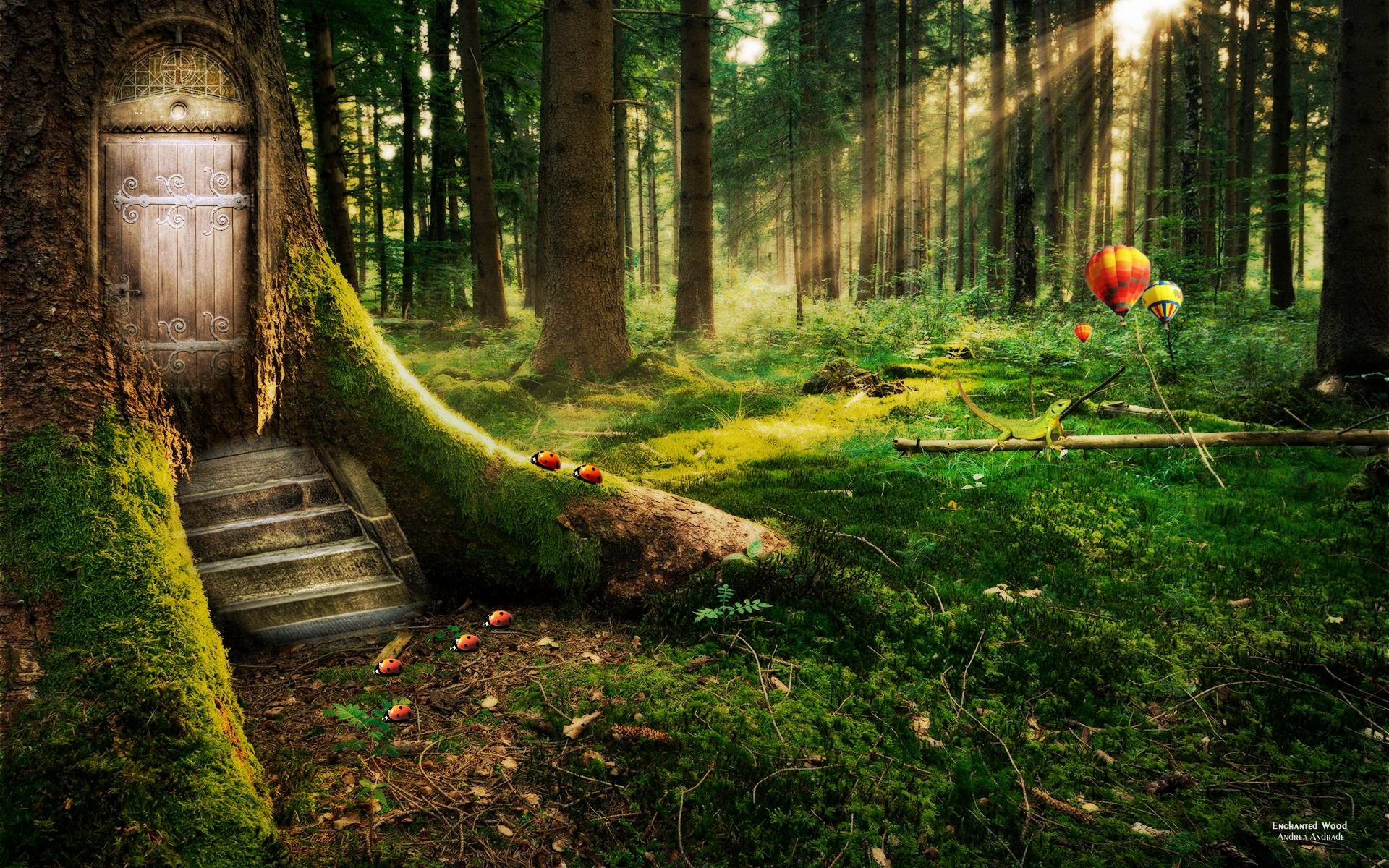 Enchanted Forest Wallpapers (62+ images)