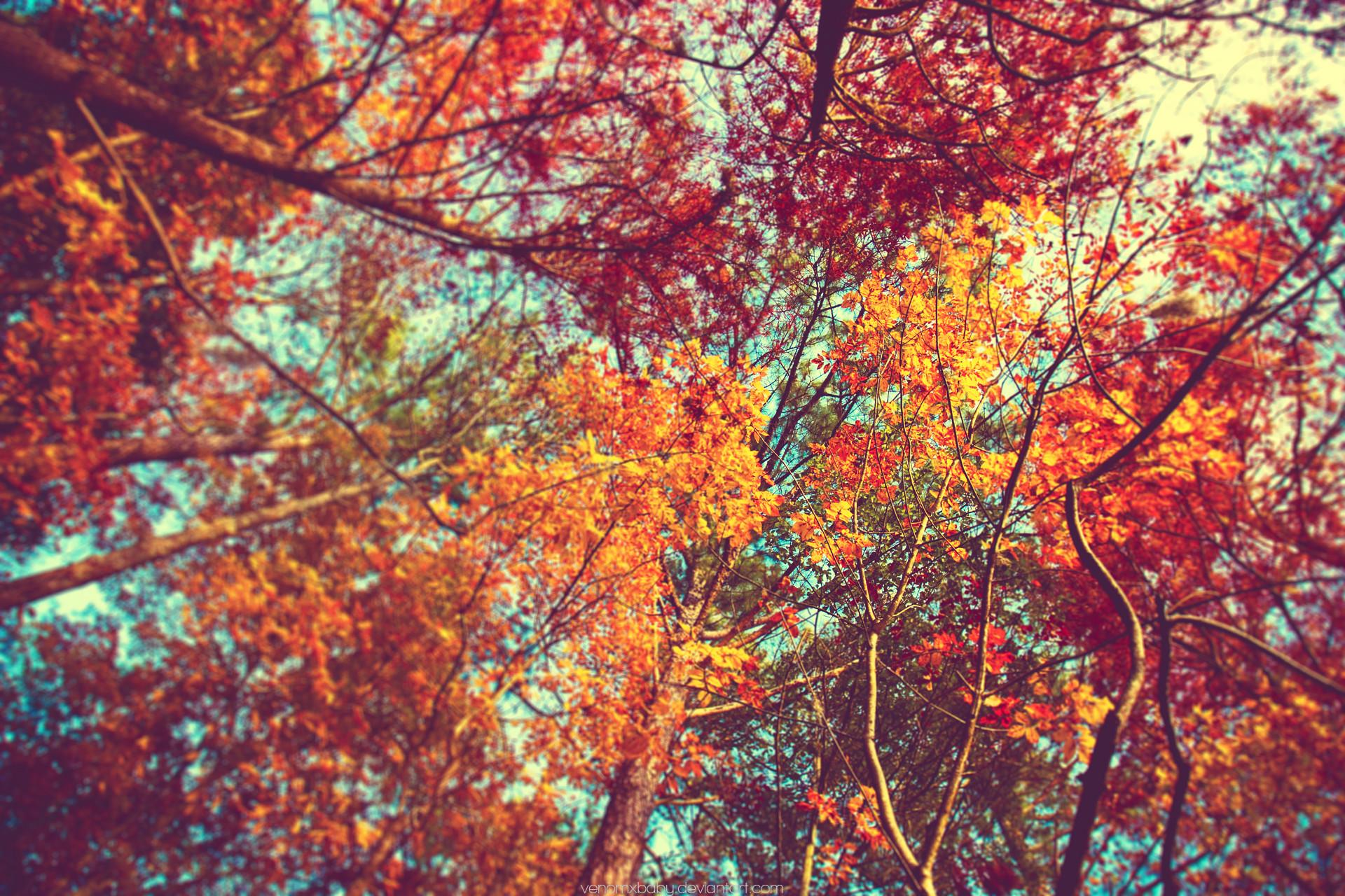 Autum Backgrounds: Desktop Wallpaper Autumn Leaves (65+ Images