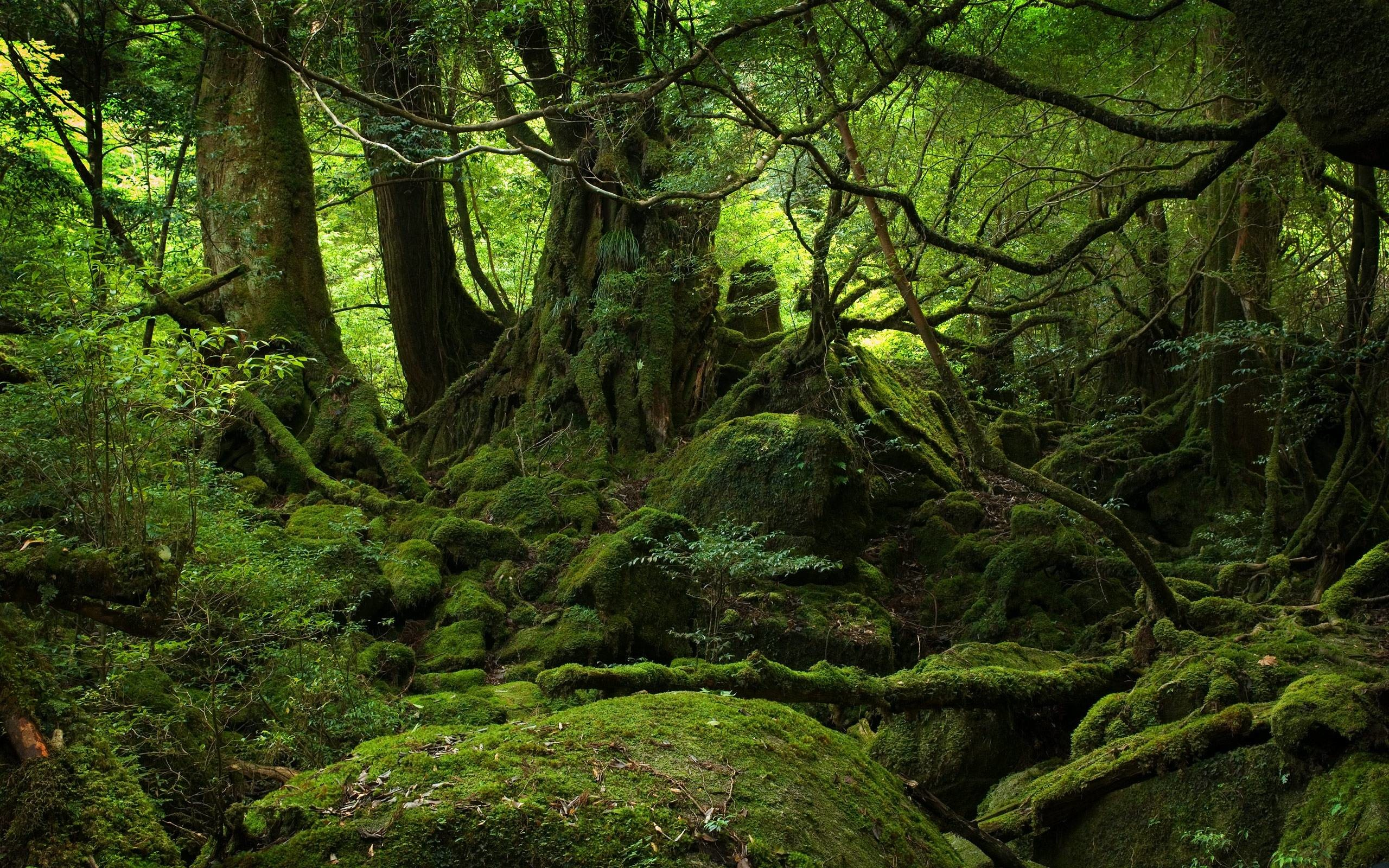 Great Wallpaper Mac Forest - 1052752-amazing-hd-forest-wallpaper-2560x1600-for-mac  Gallery_268142.jpg