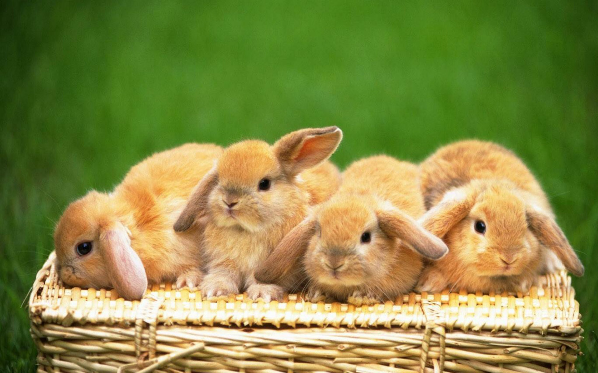 how to get partnered on rabbit
