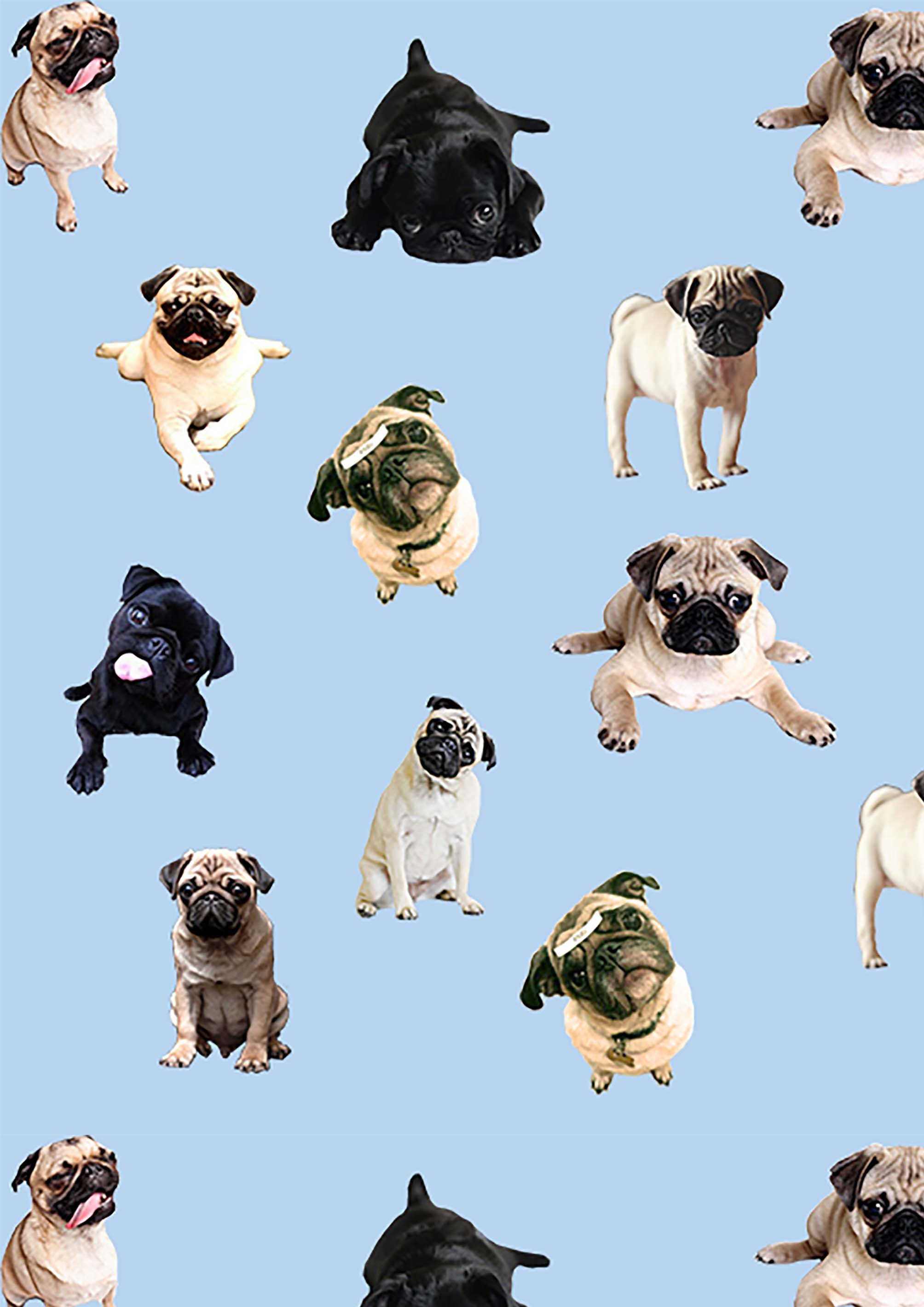 1080x1920 Cute Pugs Puppies IPhone 6 Wallpaper HD
