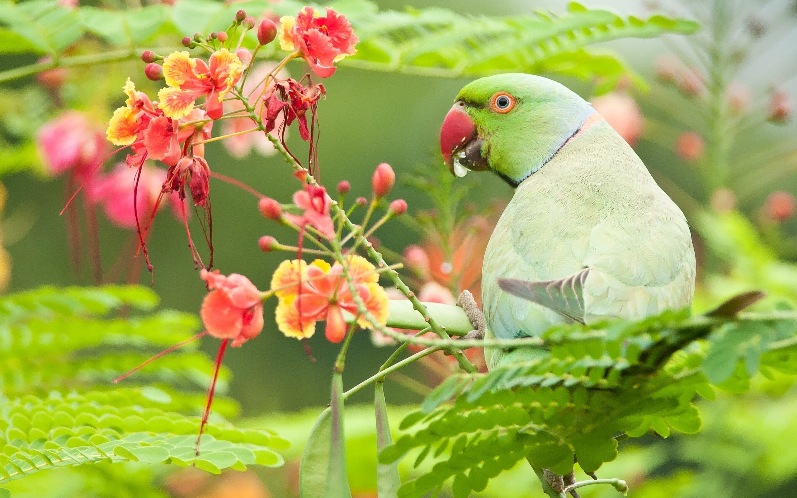2560x1600 Green Parrot Bird With Flowers