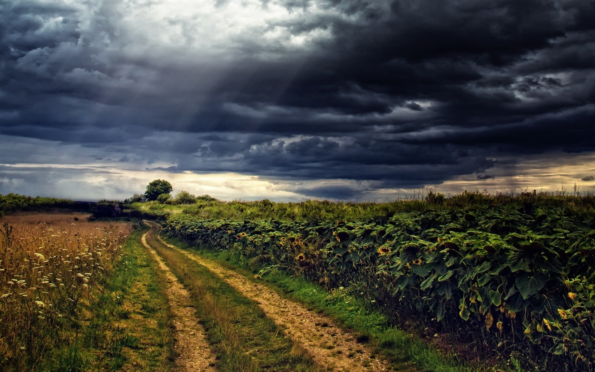 1920x1200 Sun Flowers Path Stormy Sky wallpapers and stock photos