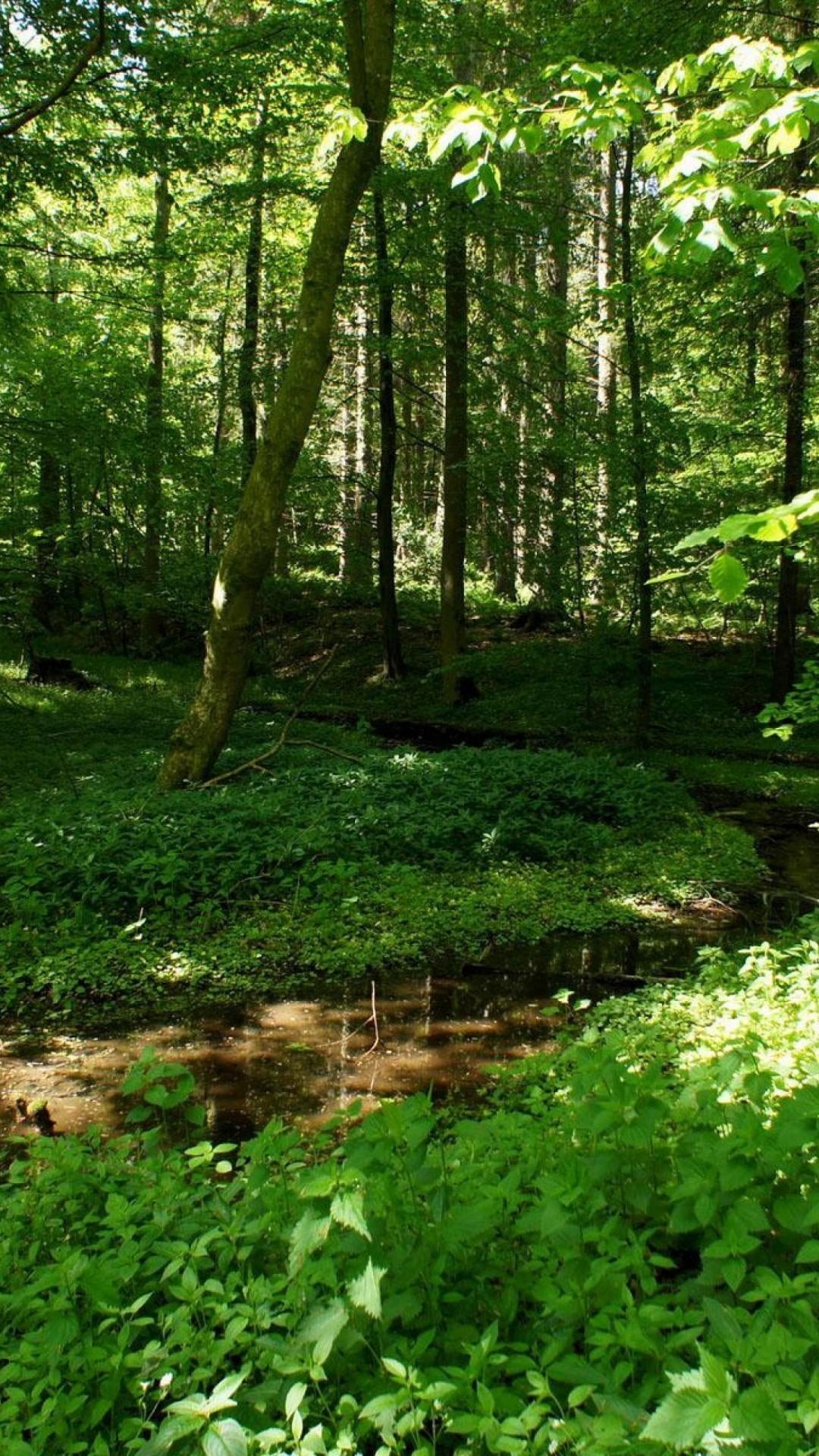 Must see Wallpaper Minecraft Forest - 1061099-download-green-forest-wallpaper-1080x1920  HD_801392.jpg