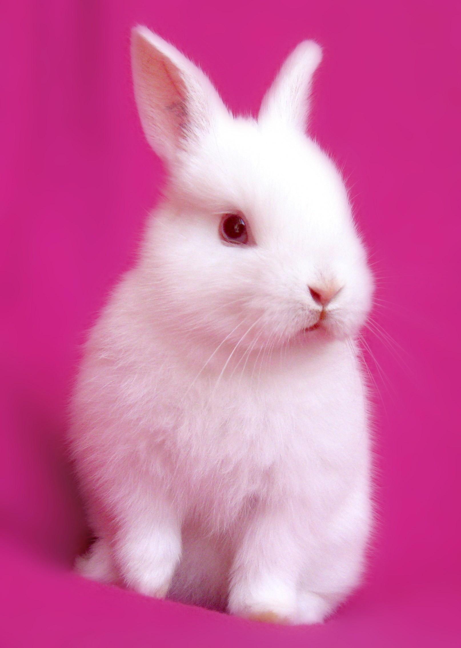 Baby Bunnies Wallpaper 67 Images