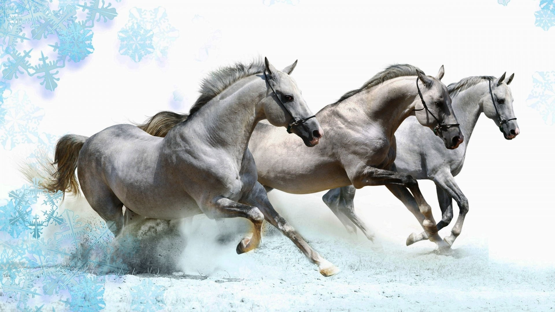 Running Horses Wallpaper (63+ images) - photo#20