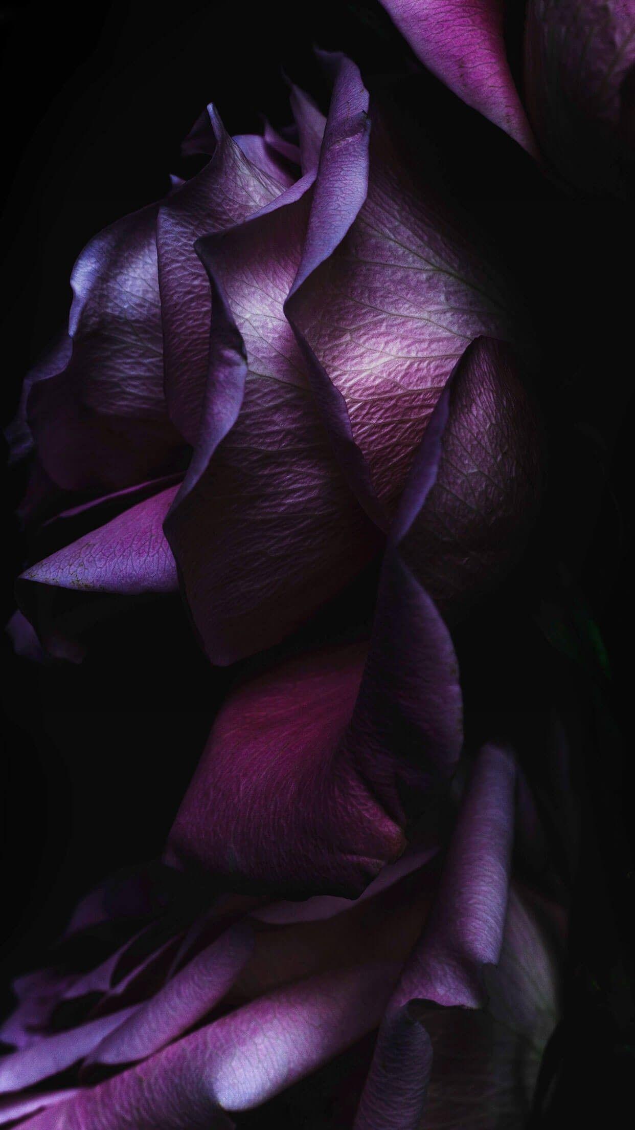Pink and Black Rose Wallpaper (69+ images)