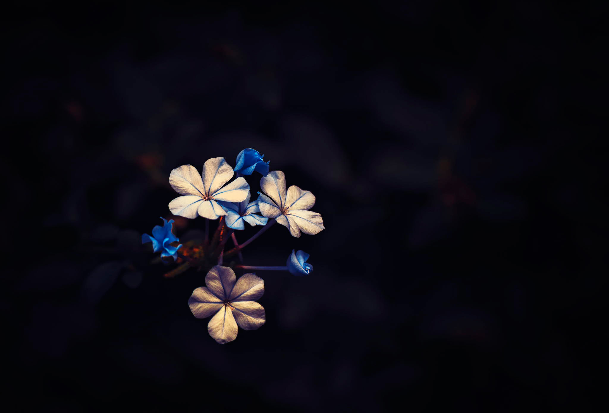 Flowers On Black Background Wallpaper 77 Images