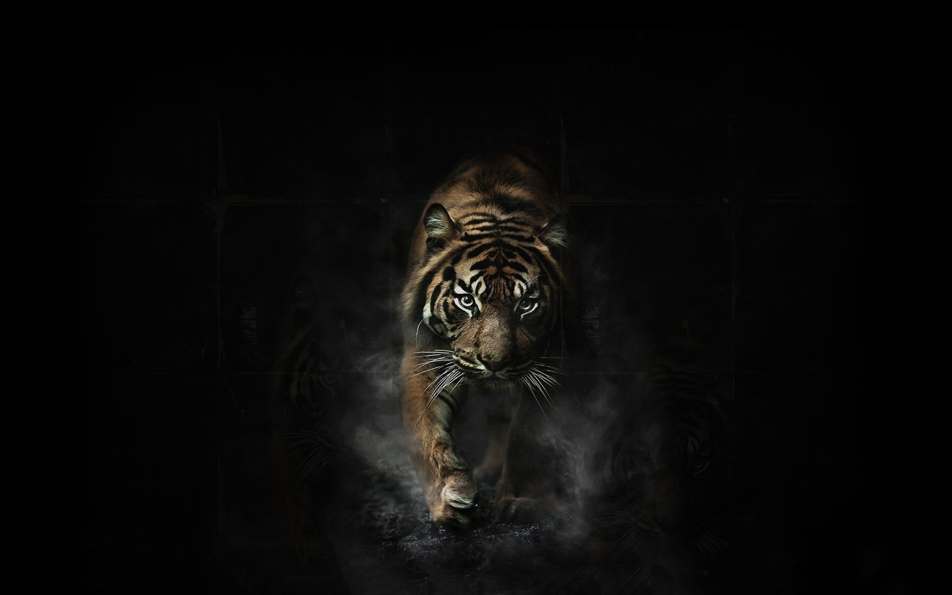 1920x1200 Tiger Wallpapers Best 1920A 1200 Tigar 32